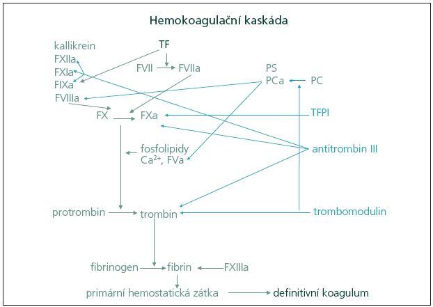 Schéma 2. Princip hemokoagulační kaskády a tvorby definitivního koagula. TF: tkáňový faktor, TFPI: inhibitor tkáňového faktoru (tissue factor pathway inhibitor), PS: protein S, PC: protein C, a: aktivovaný