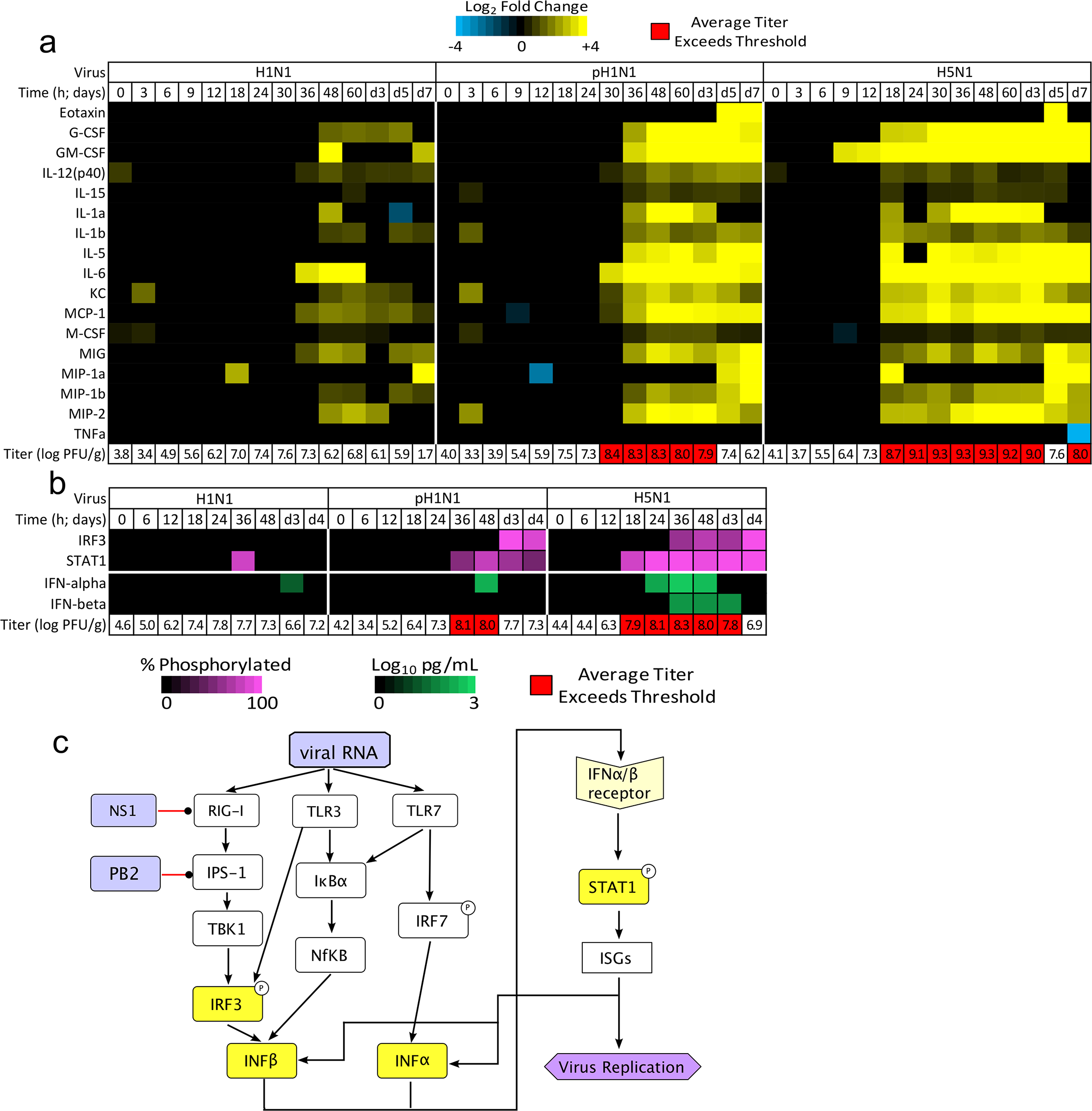 Threshold-like behavior is observed on upstream and downstream components of the IFN signaling pathway.