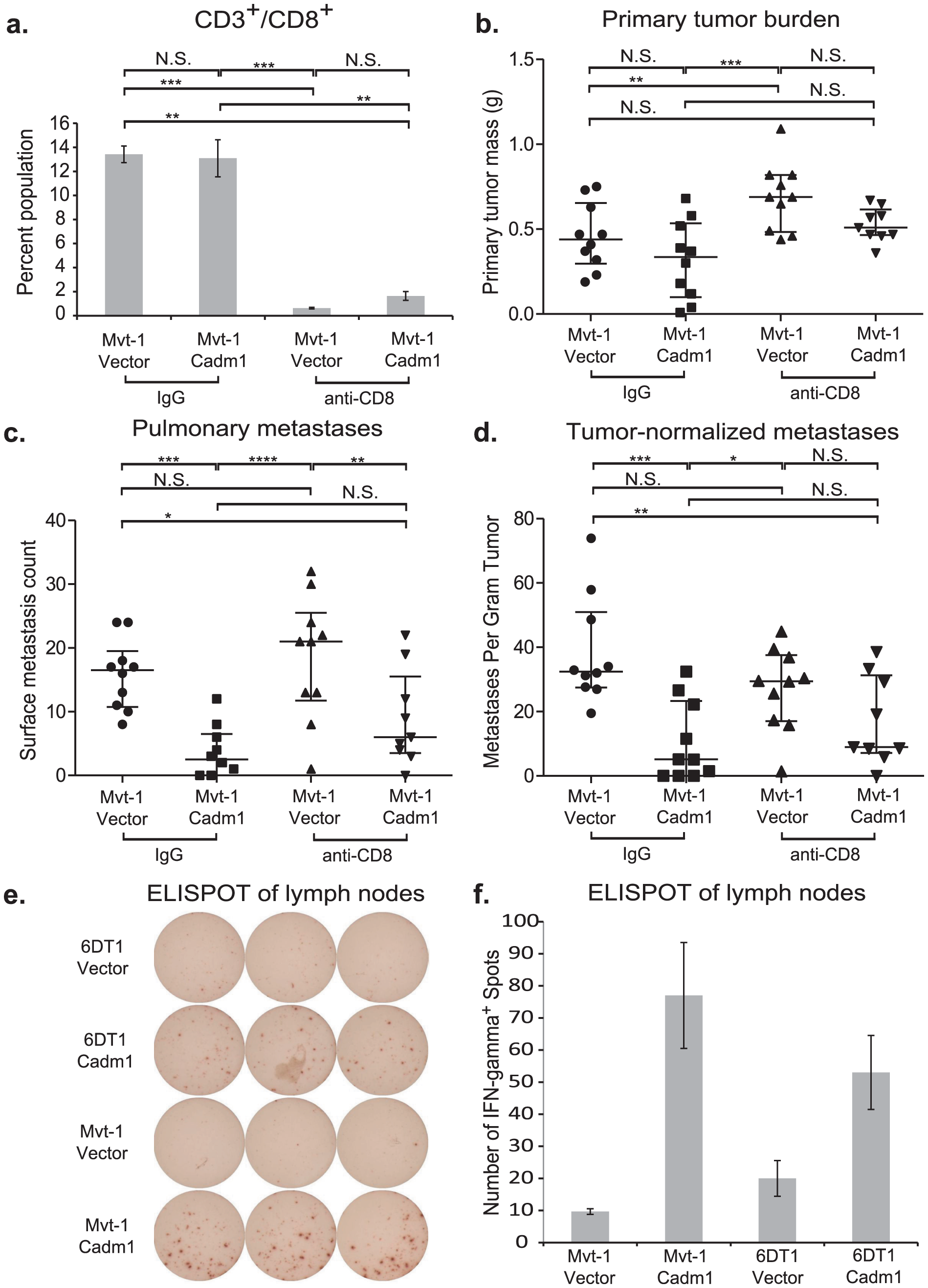 The effect of <i>Cadm1</i> expression on tumor and metastasis in CD8<sup>+</sup> T cell depleted mice.