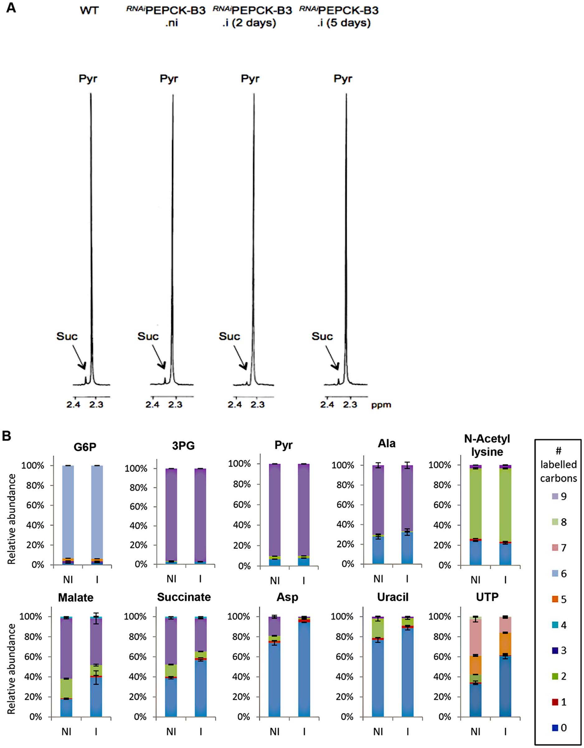Metabolic profile of <sup><i>RNAi</i></sup>PEPCK-B3 BSF <i>T</i>. <i>brucei</i> confirms depletion of dicarboxylic acids and pyrimidines.