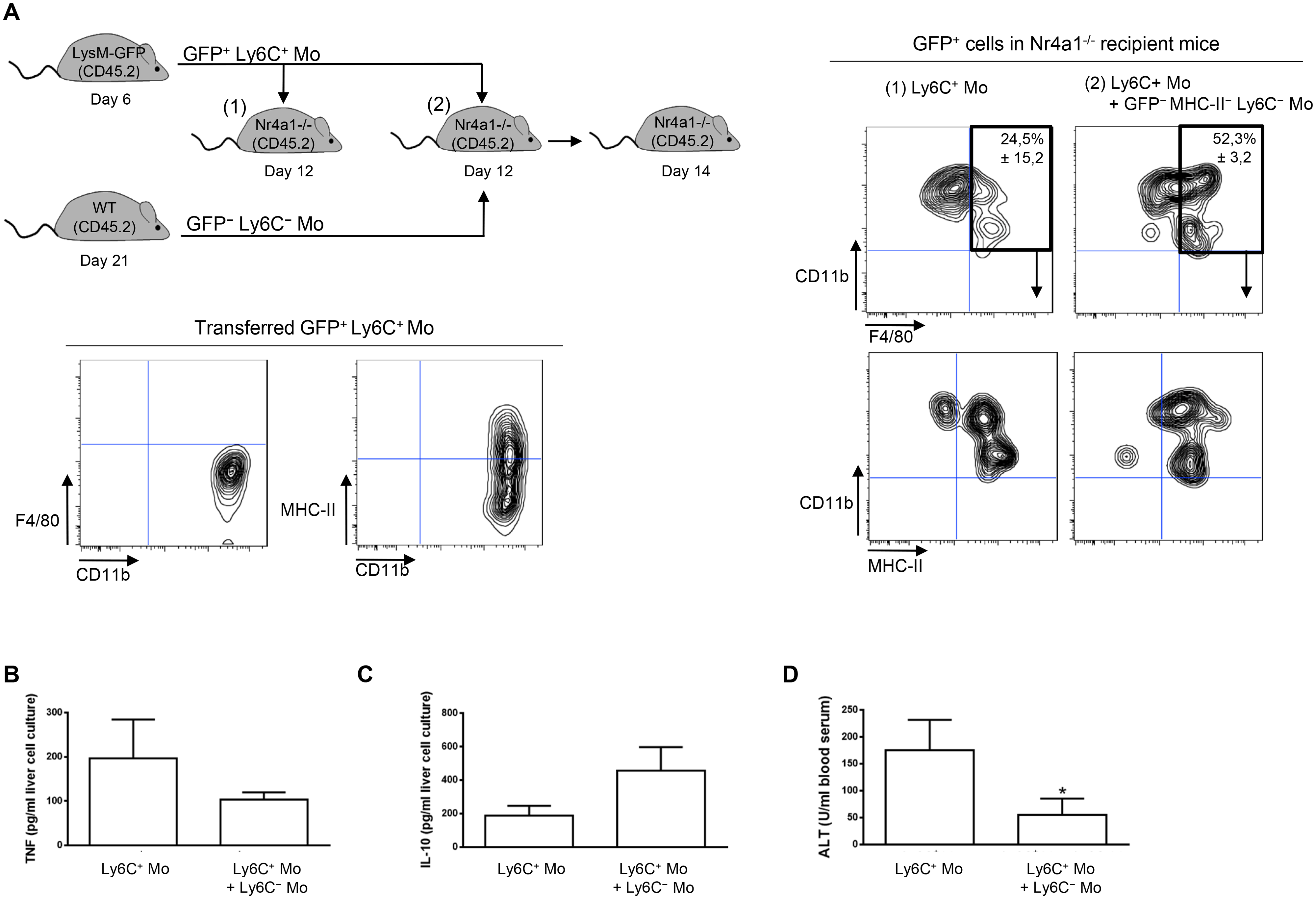 Ly6C<sup>-</sup> monocytes induce differentiation of Ly6C<sup>+</sup> monocytes into macrophages in <i>T</i>. <i>congolense</i>-infected Nr4a1<sup>-/-</sup> mice that lack endogenous Ly6C<sup>-</sup> monocytes.