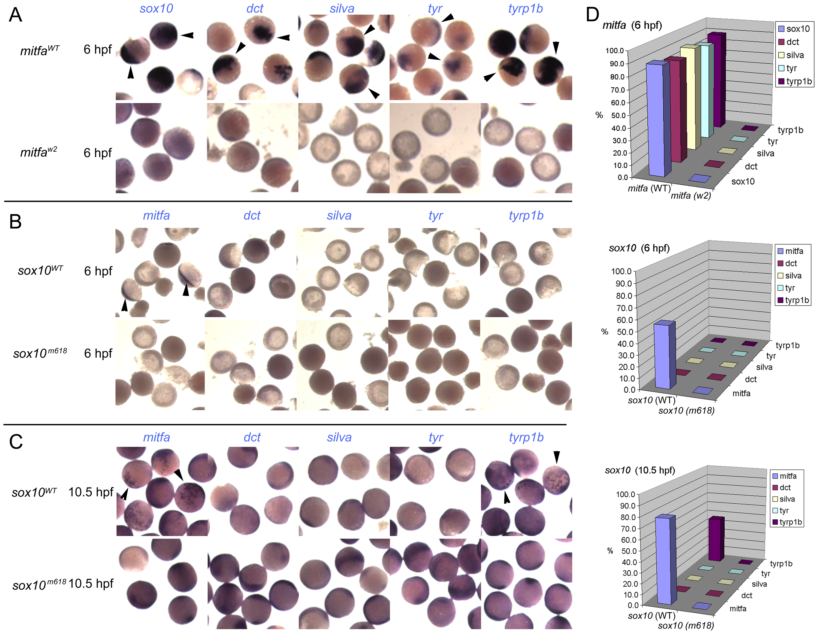Induction of Mitfa-responsive genes is largely suppressed by Sox10.