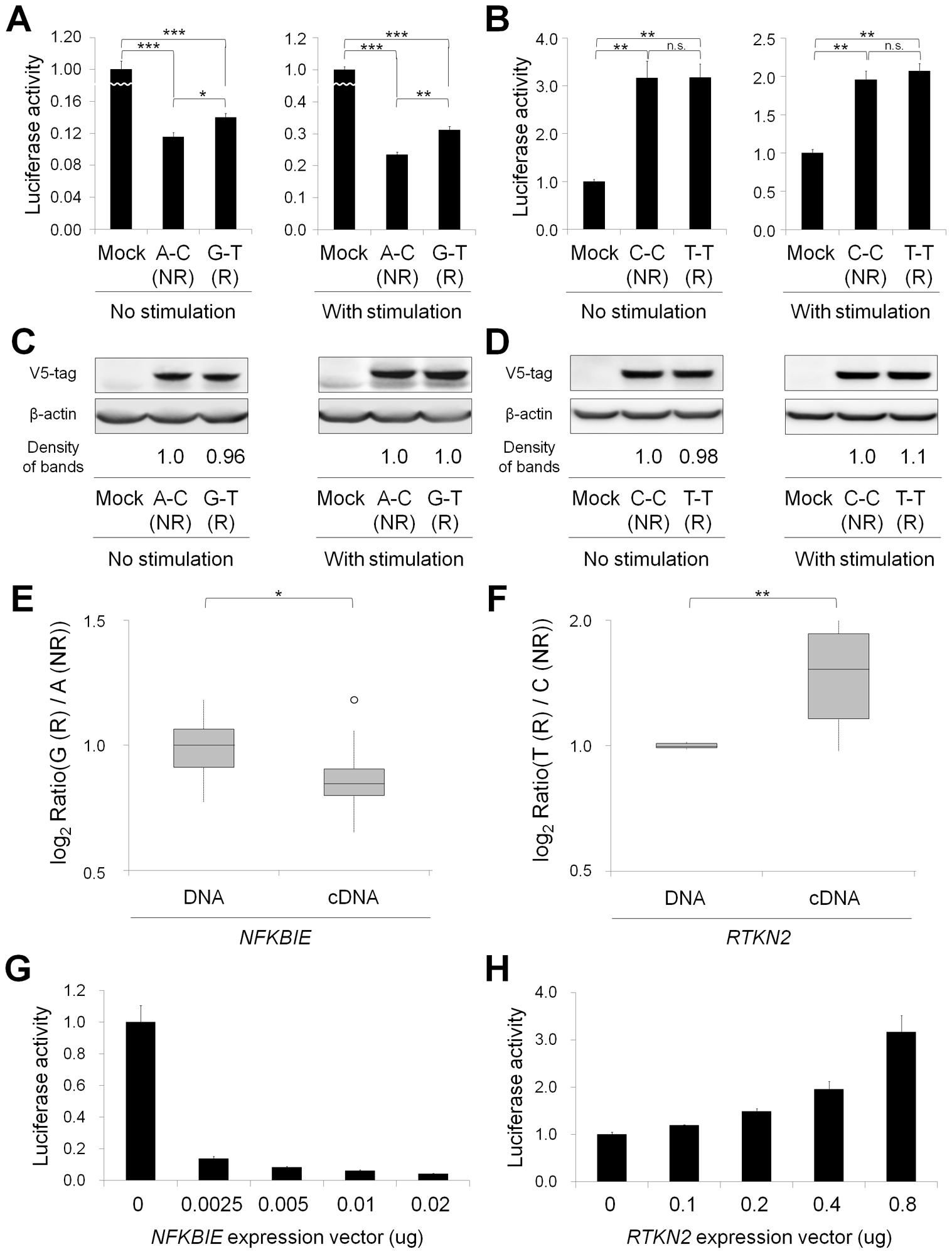 Functional evaluation of nsSNPs and allelic imbalance of expression in <i>NFKBIE</i> and <i>RTKN2</i>.