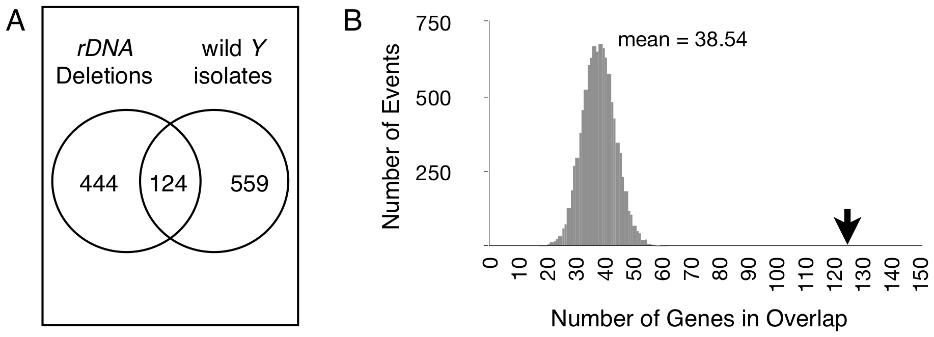 Differentially expressed genes are shared between chromosomes with induced <i>rDNA</i> deletions and naturally occurring <i>Y</i> chromosomes.