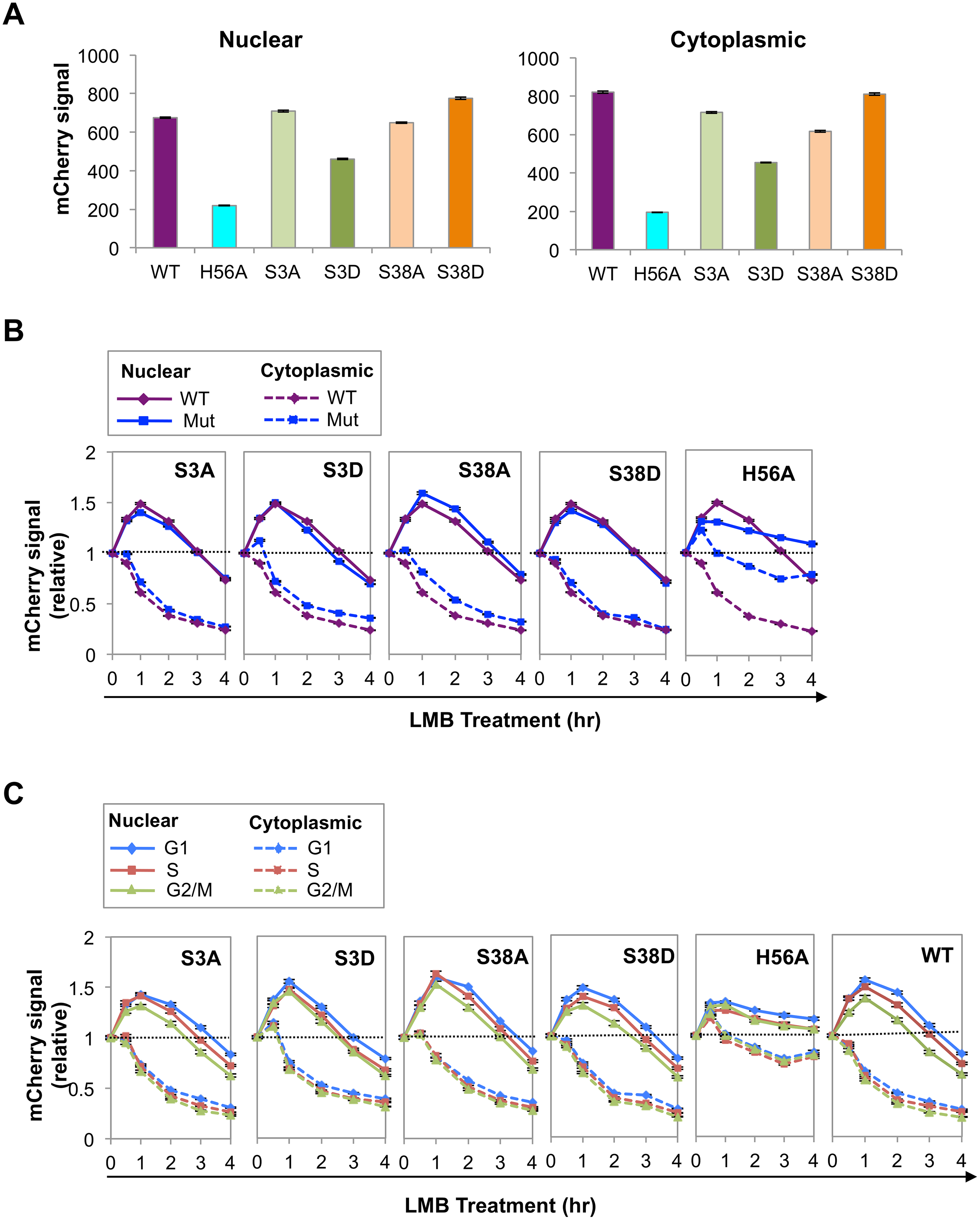 Phosphorylation and catalytic activity regulate AID abundance and nuclear stability.