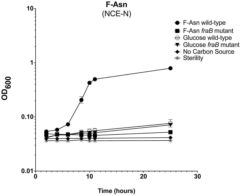 Growth of <i>Salmonella</i> on F-Asn as sole nitrogen source.