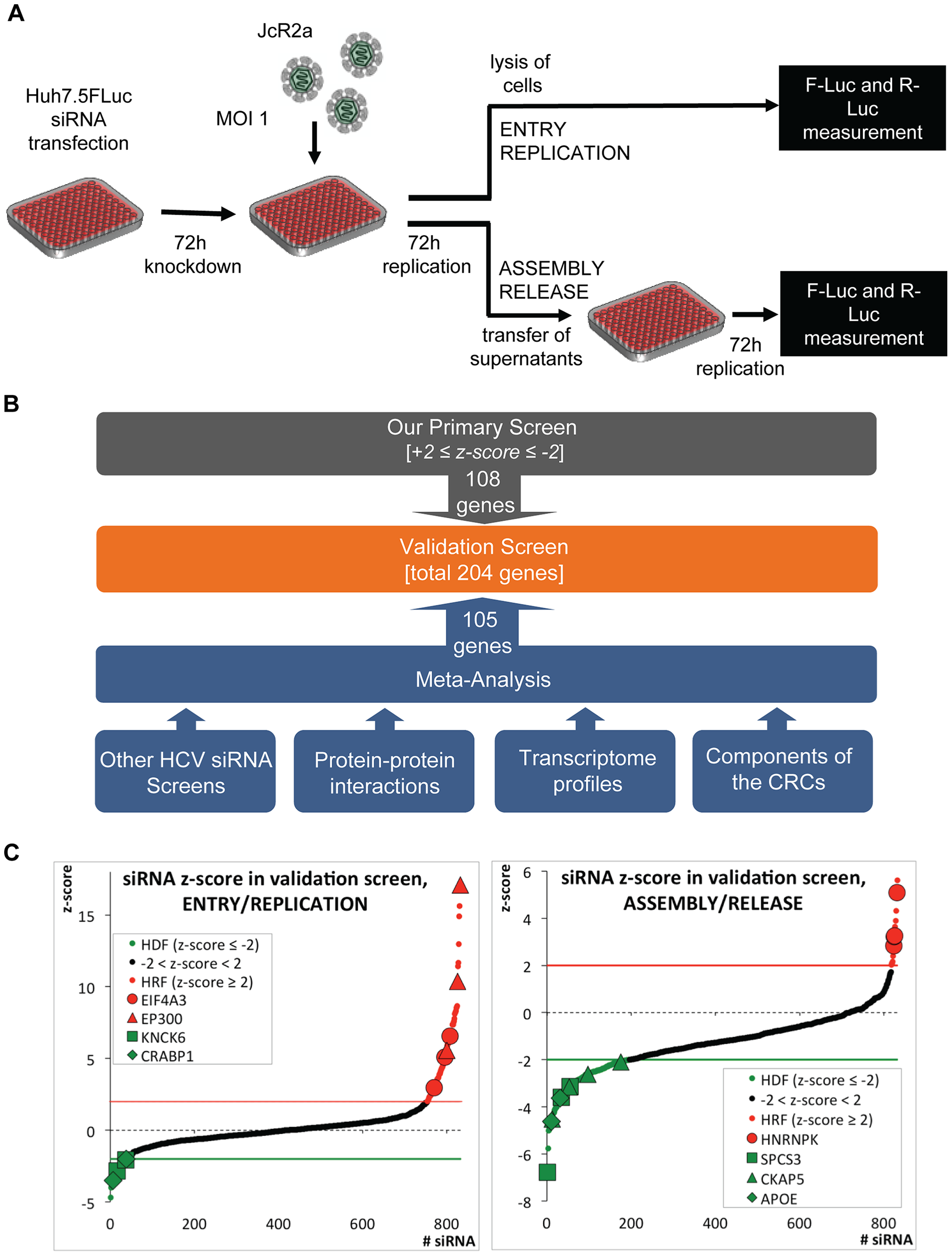High-throughput siRNA screen used to identify cellular factors involved in the HCV life cycle.