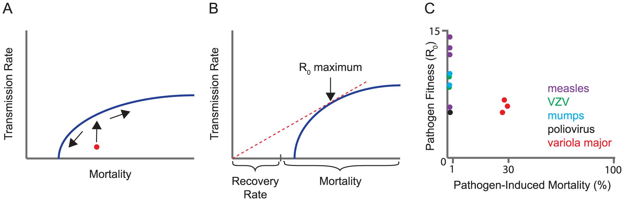 Trade-off models for virulence evolution.