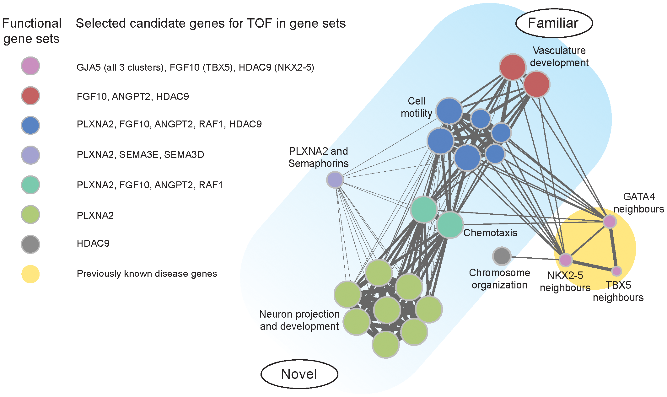 Functional clusters of candidate genes for tetralogy of Fallot.