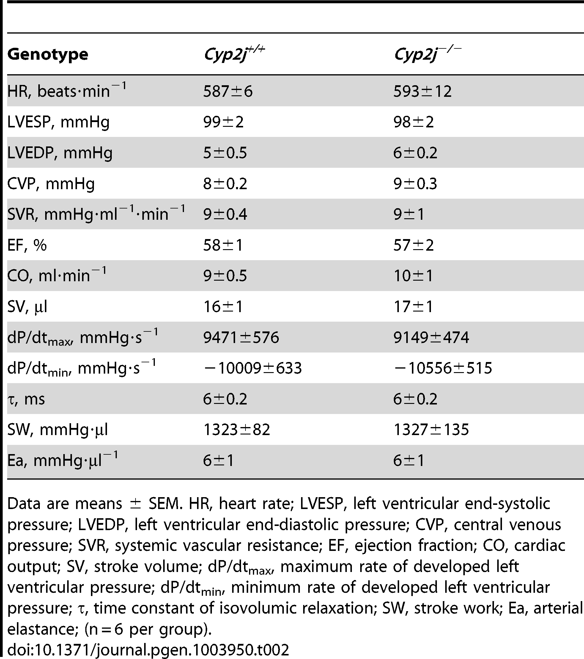 Comparison of systemic hemodynamic measurements in anesthetized <i>Cyp2j<sup>+/+</sup></i> and <i>Cyp2j<sup>−/−</sup></i> mice.