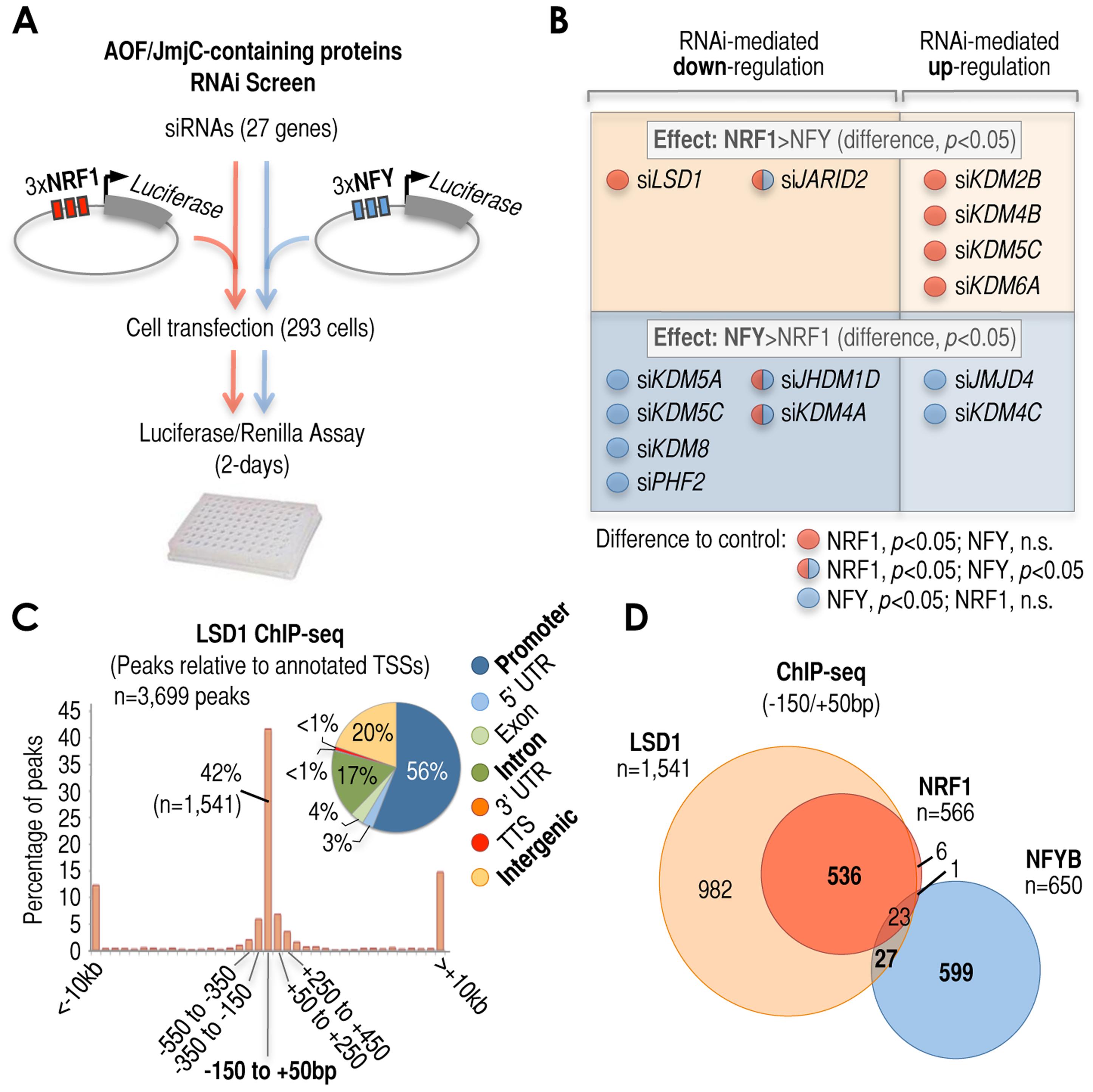 Cardinal motifs dictate patterns of transcriptional regulatory activities.