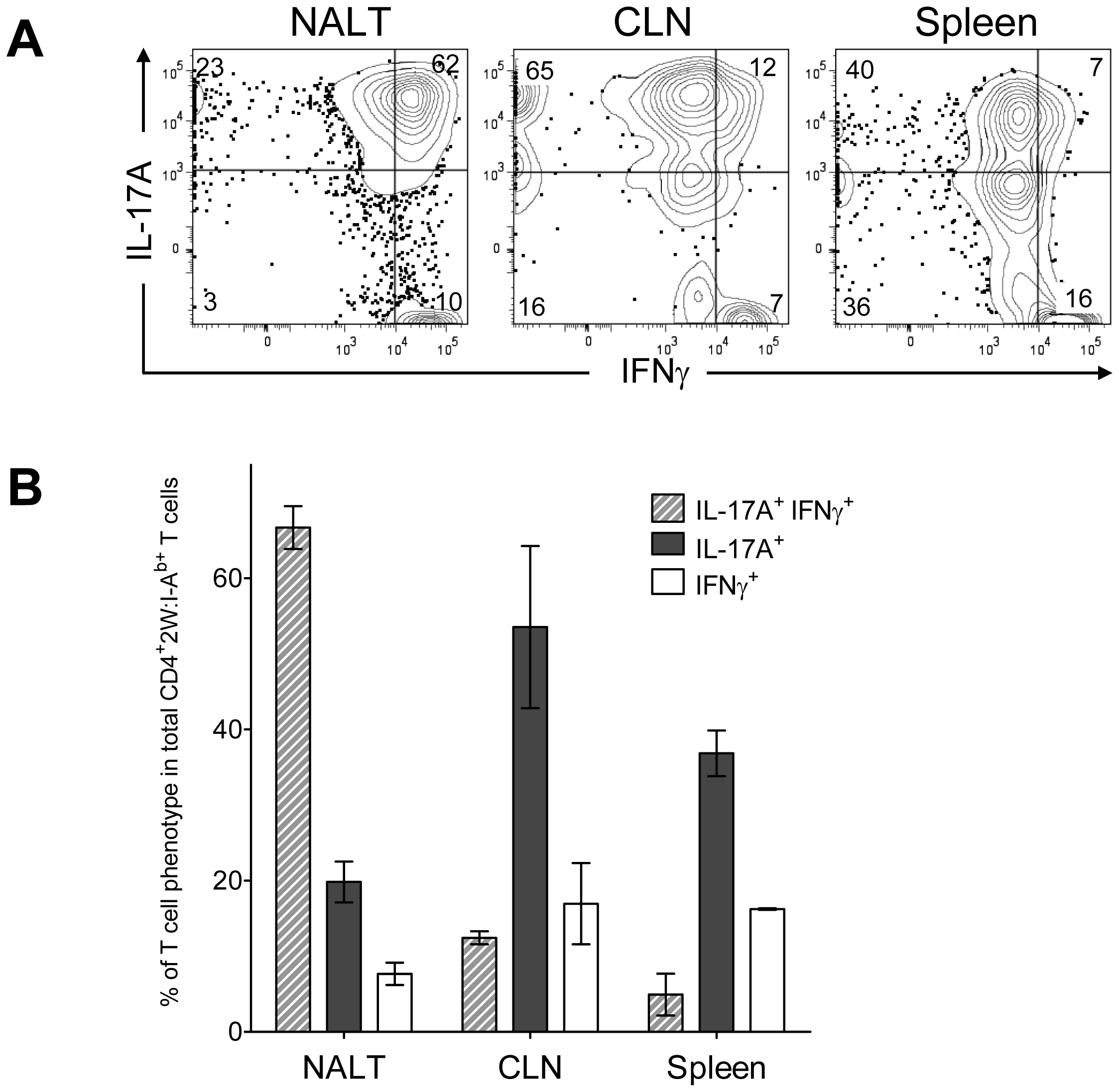 Recurrent GAS infection shifts the cytokine profile of CD4<sup>+</sup> 2W:I-A<sup>b+</sup> T cells to IL-17A<sup>+</sup>, IFN-γ<sup>+</sup> population in NALT.