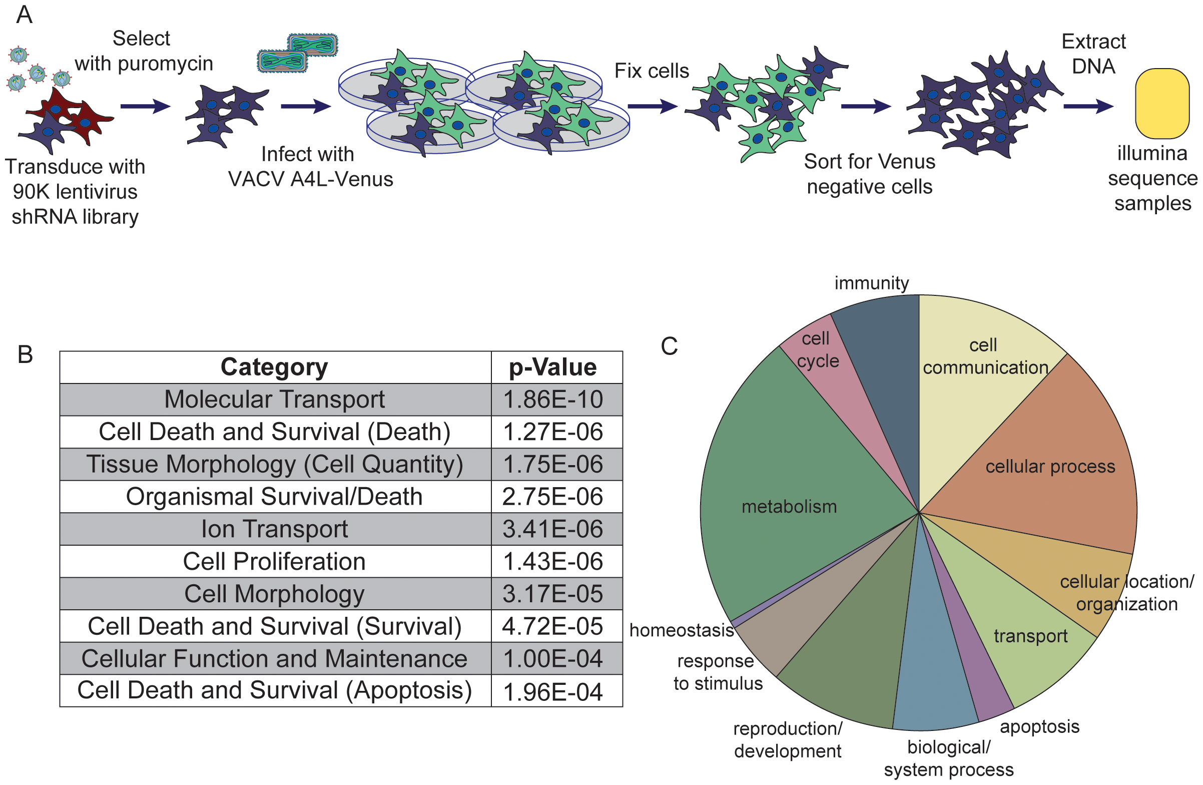 Pooled-cell shRNA screen revealed host factors necessary for orthopoxvirus infection.