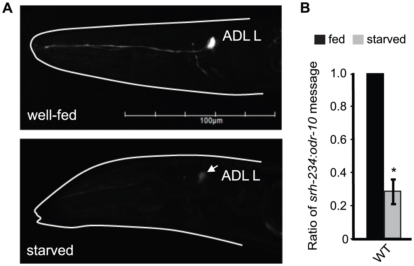 Starvation downregulates the expression of <i>srh-234</i> in ADL neurons.