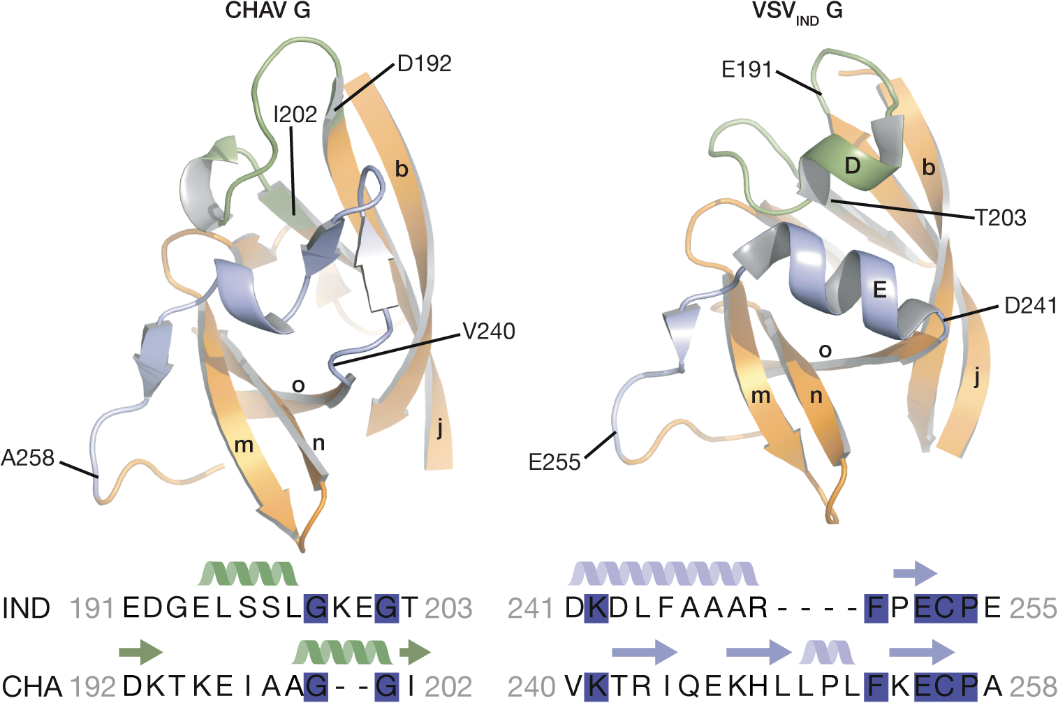 Ribbon representation of CHAV-G and VSV-G PHDs.