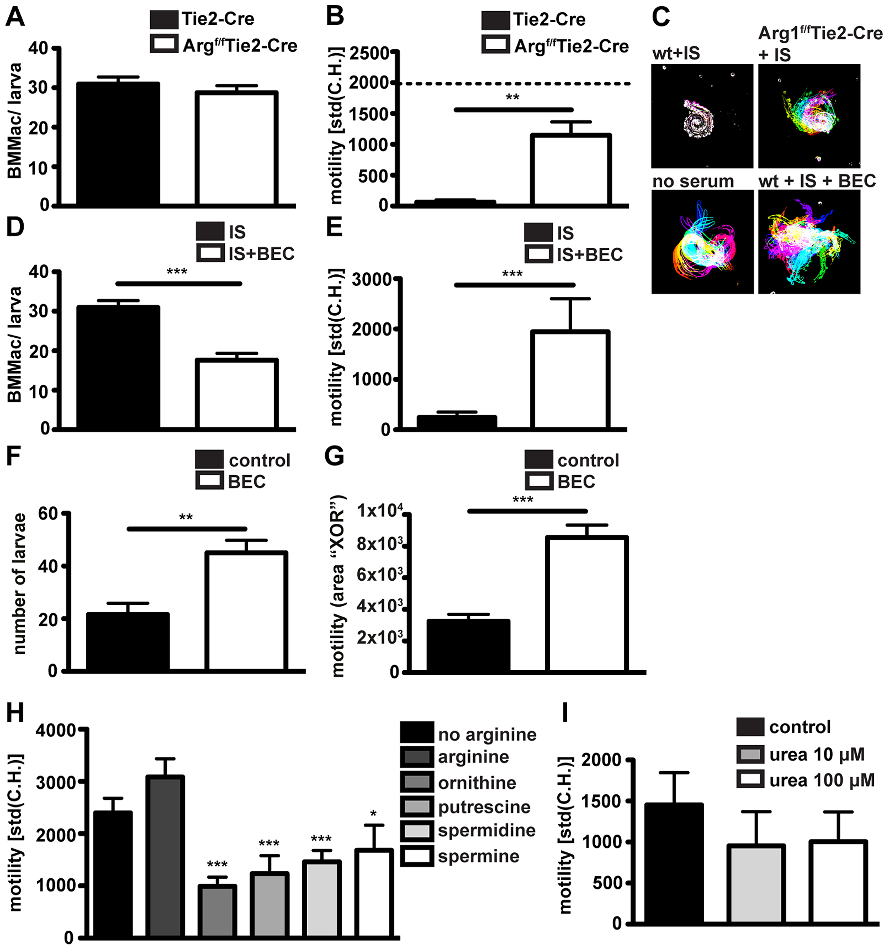 Arg1 is needed for to efficient larval trapping <i>in vitro</i> and <i>in vivo</i> and L-ornithine or polyamines but not urea can reduce larval motility <i>in vitro</i>.
