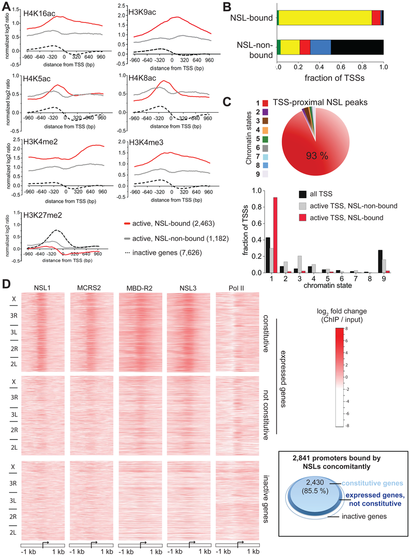 NSL proteins preferably associate with the promoters of constitutively active genes.