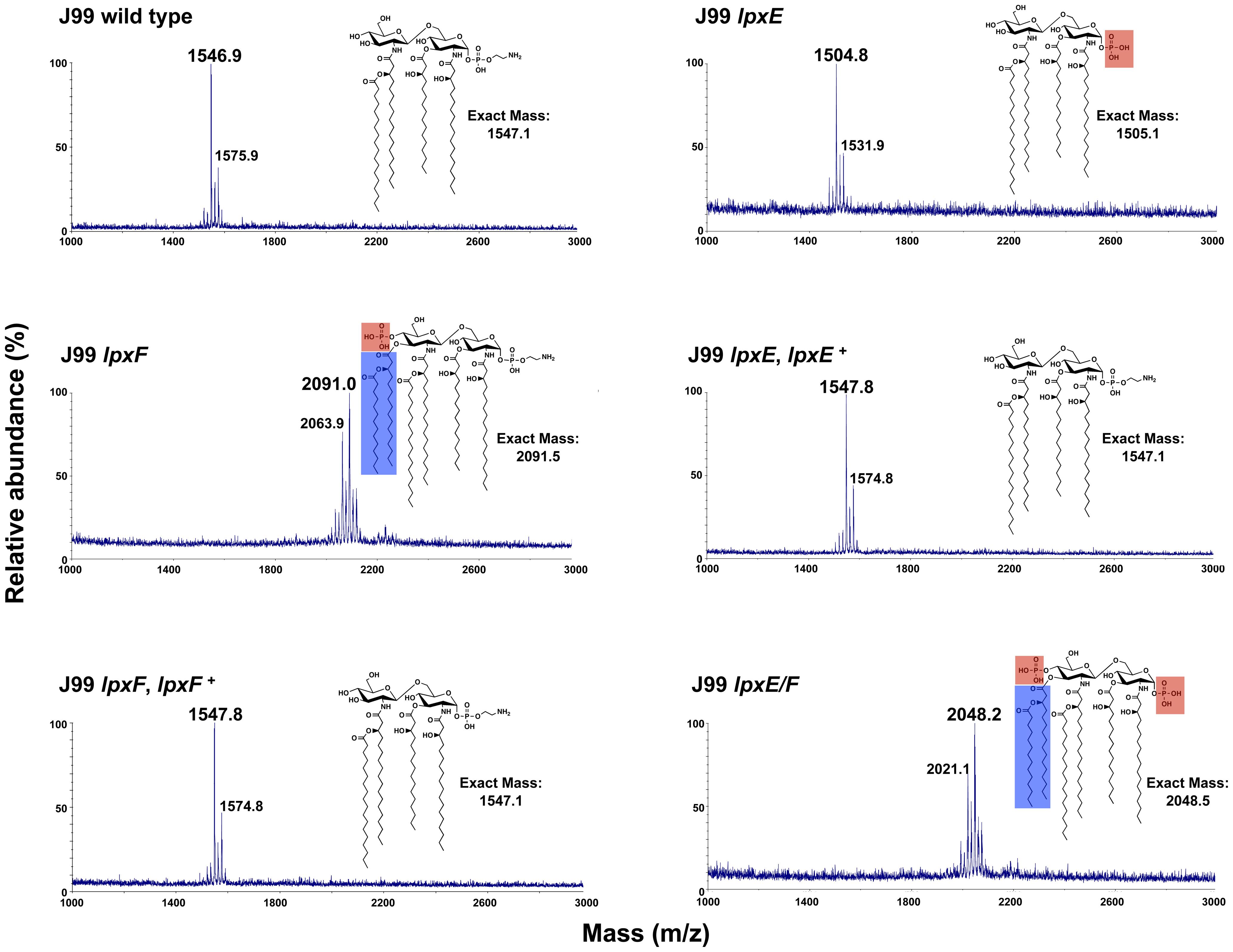 Mass spectrometry of <i>lpxE</i>, <i>lpxF</i> and <i>lpxE/F</i> mutants in strain J99.