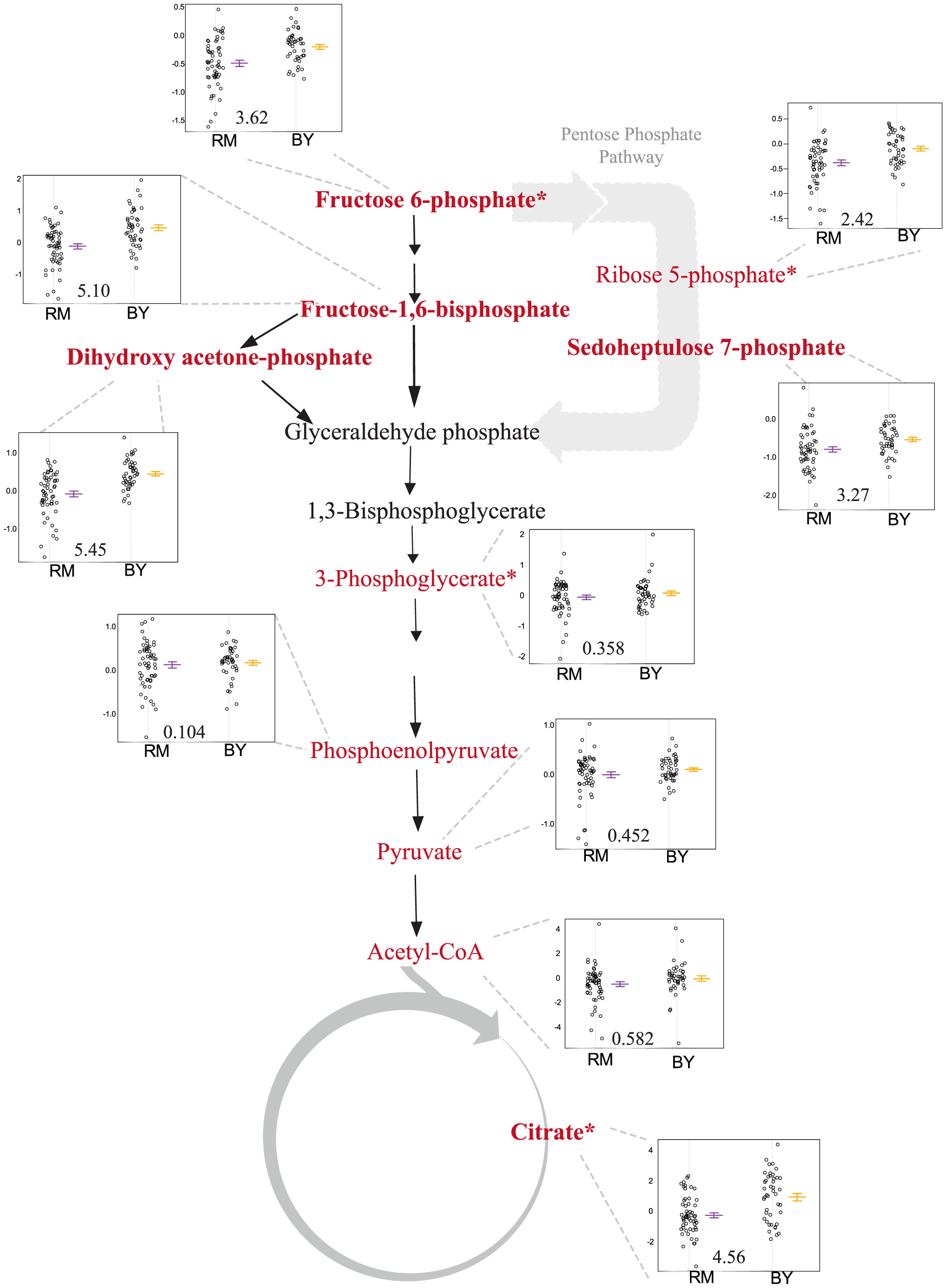 Levels of glycolysis, pentose phosphate pathway and TCA intermediates differ based on the <i>ira2</i> allele inherited.
