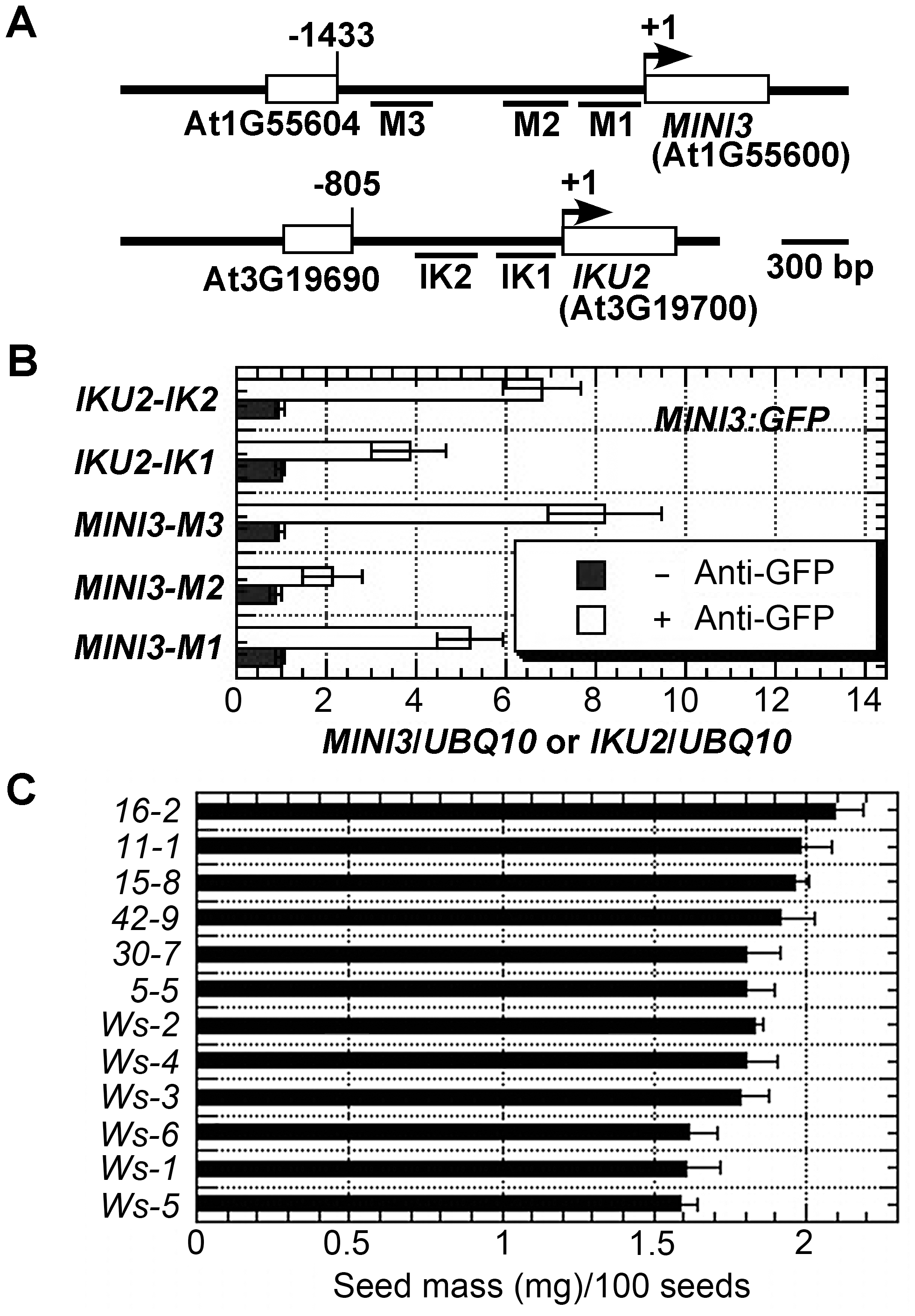 MINI3 ChIPs to the promoters of <i>MINI3</i> and <i>IKU2</i>.