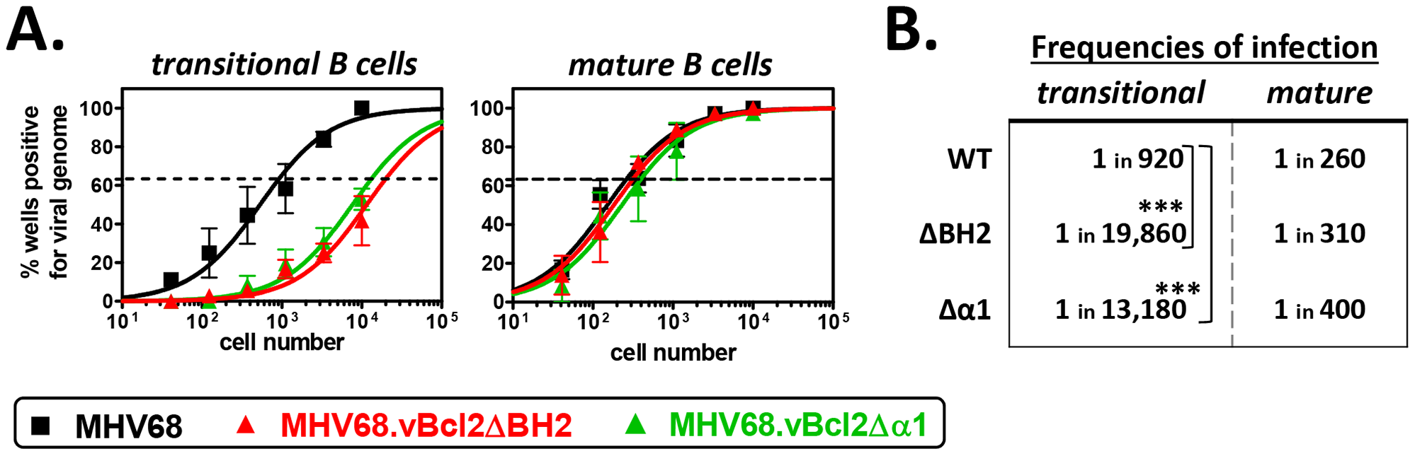 Both BH2 and α1 domains of vBcl-2 are required for efficient infection of transitional B cells.