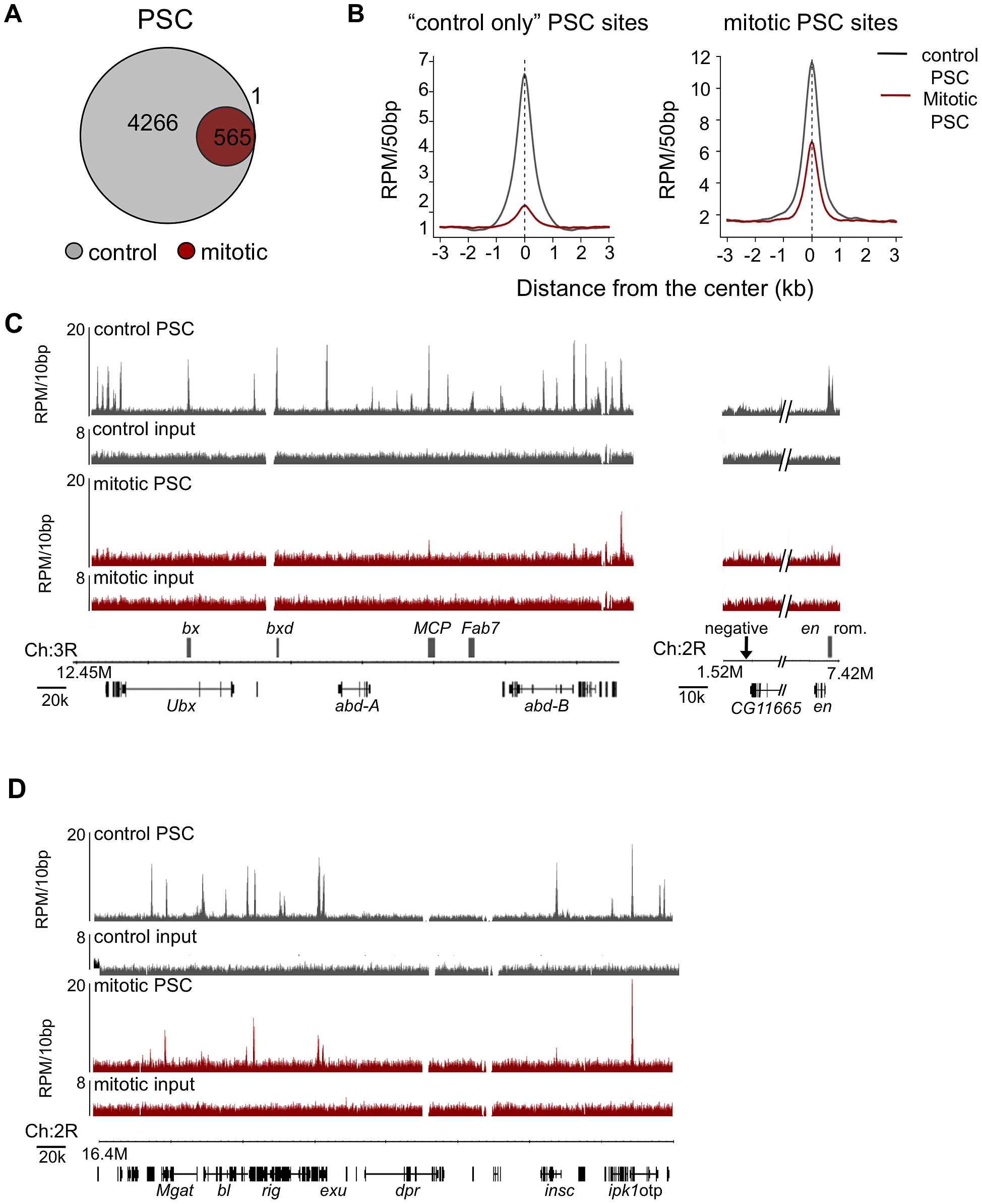 Genome-wide analysis reveals PSC is retained at specific sites on mitotic chromosomes.