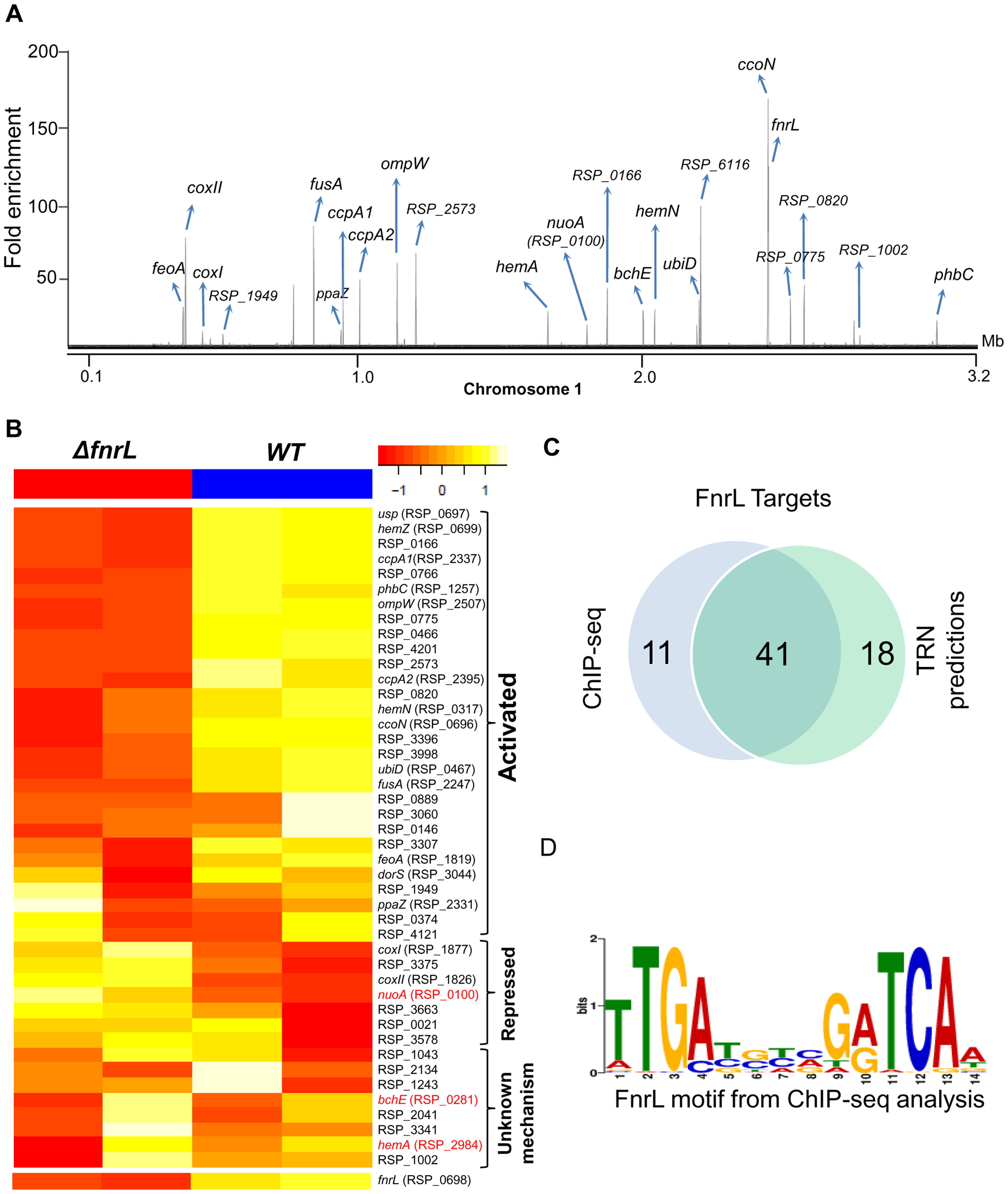 Analysis of the FnrL regulon in <i>R. sphaeroides</i>.