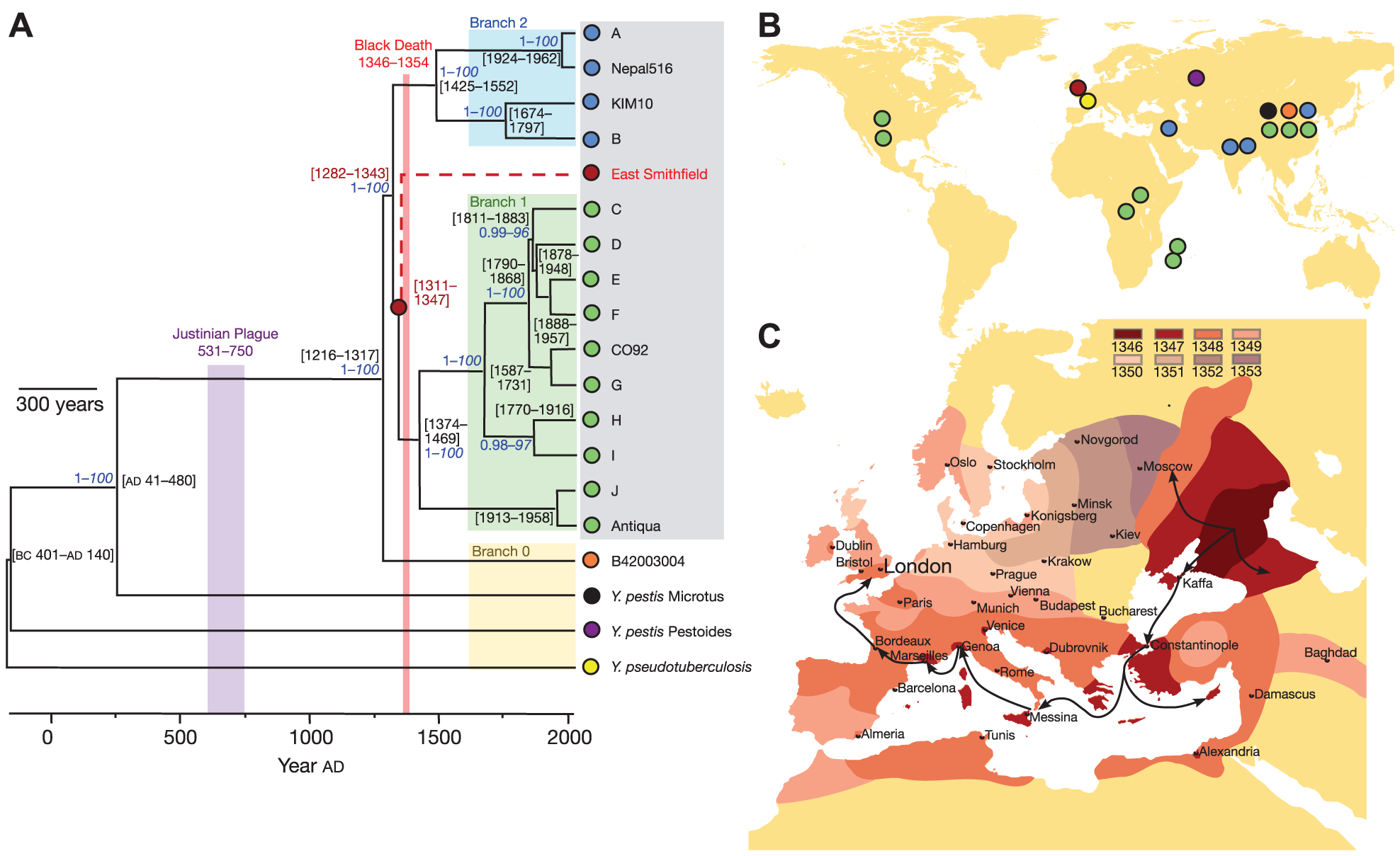 Patterns of historical transmission reconstructed by whole genome sequencing.
