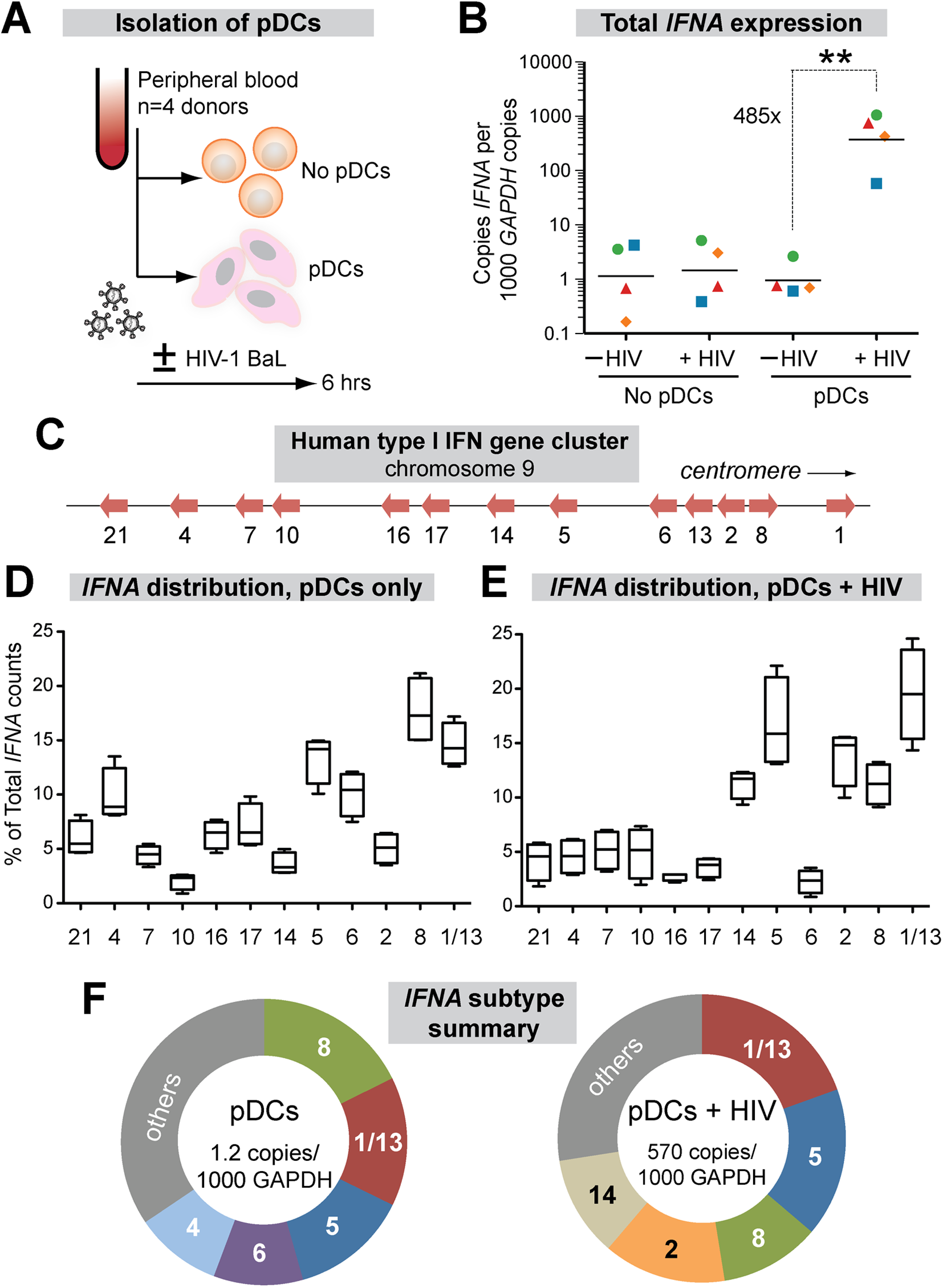 Expression of IFNα subtypes in pDCs following HIV-1 exposure.