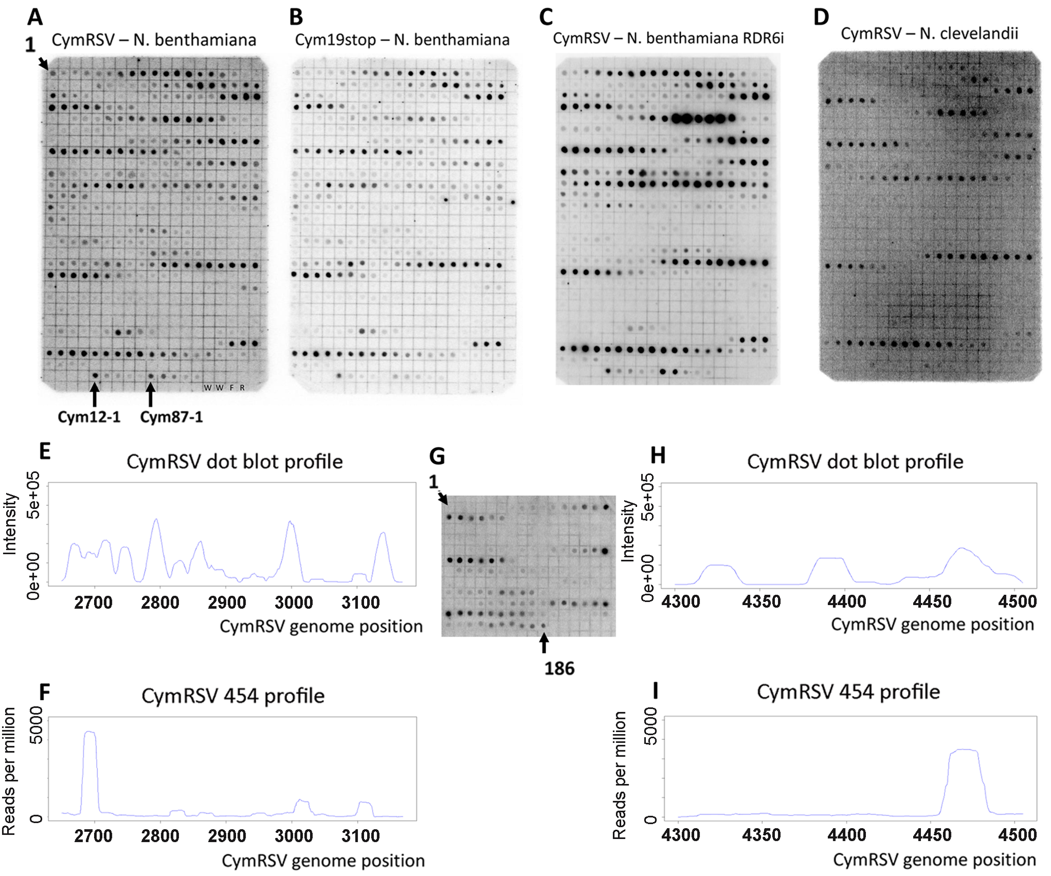 Dot blot and 454 profile of vsiRNAs.