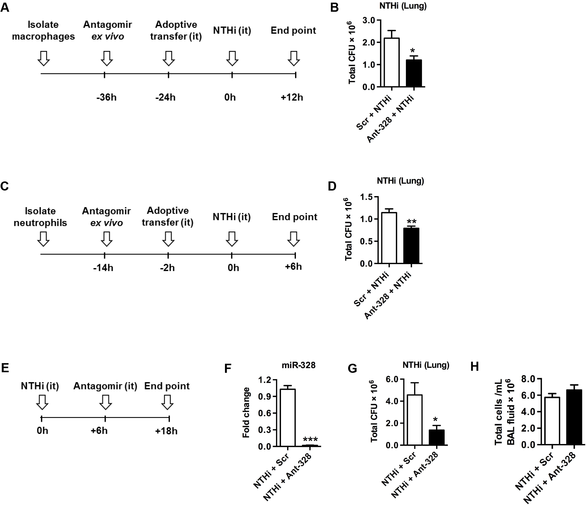 Inhibiting miR-328 improves NTHi clearance in the lungs <i>in vivo</i>.