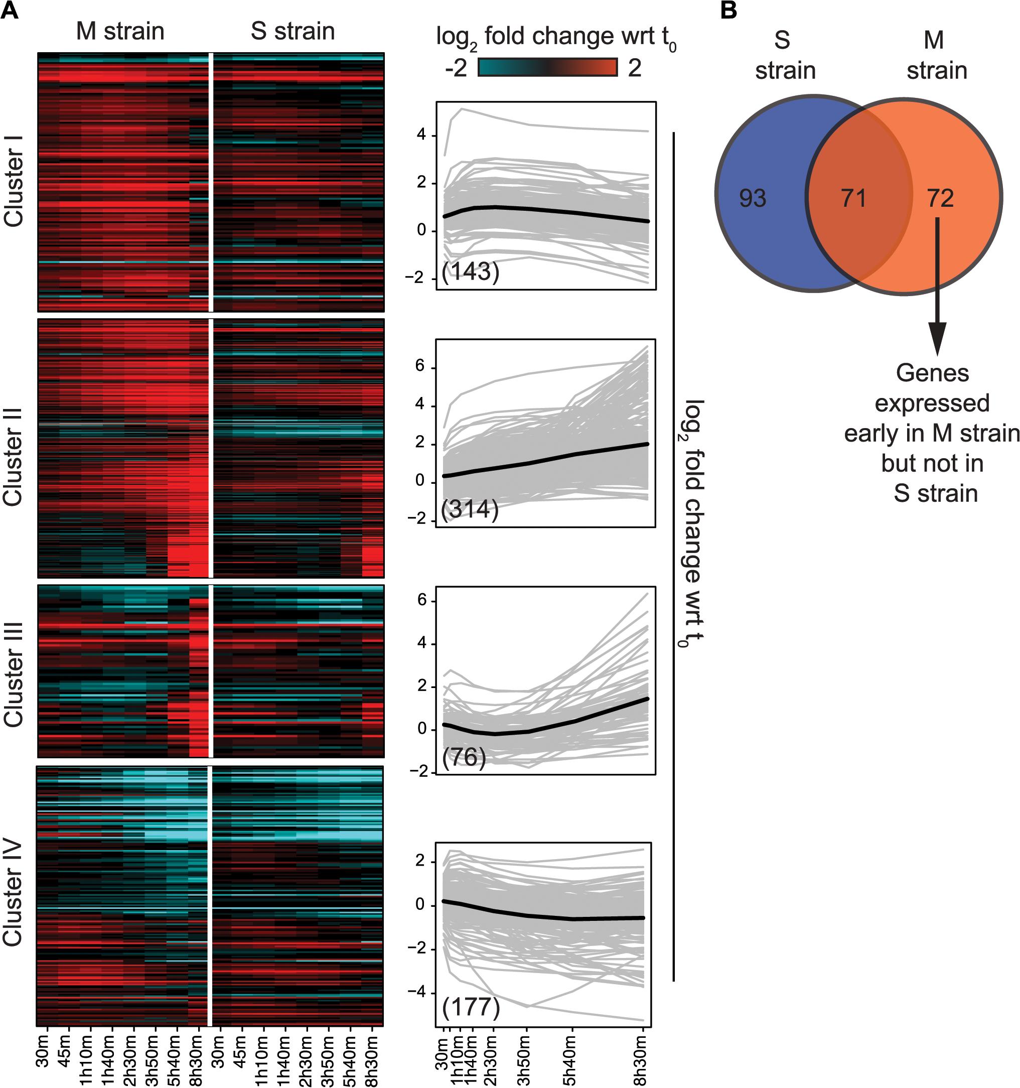Variation in the gene expression in the presence of <i>MKT1(89G)</i> during sporulation.