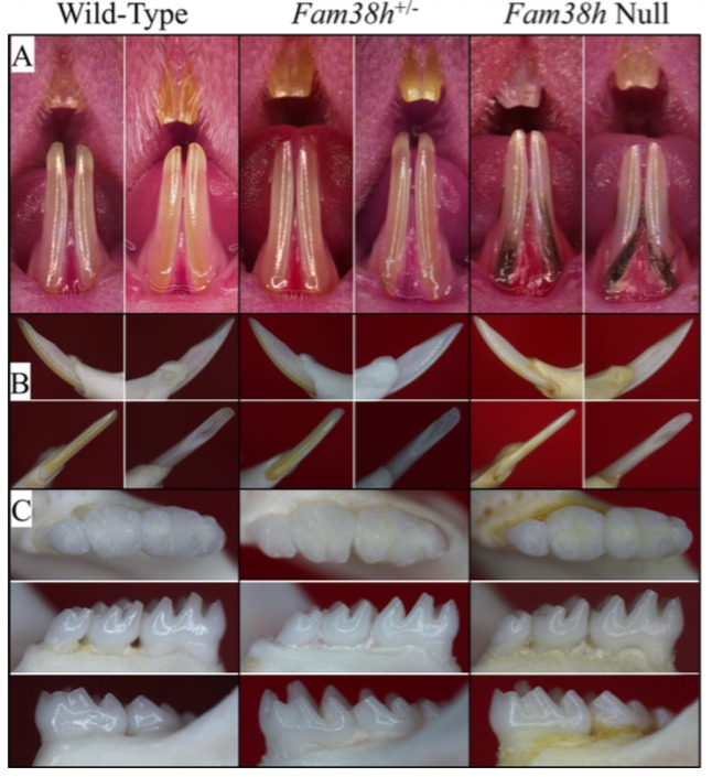 Figure 4. 