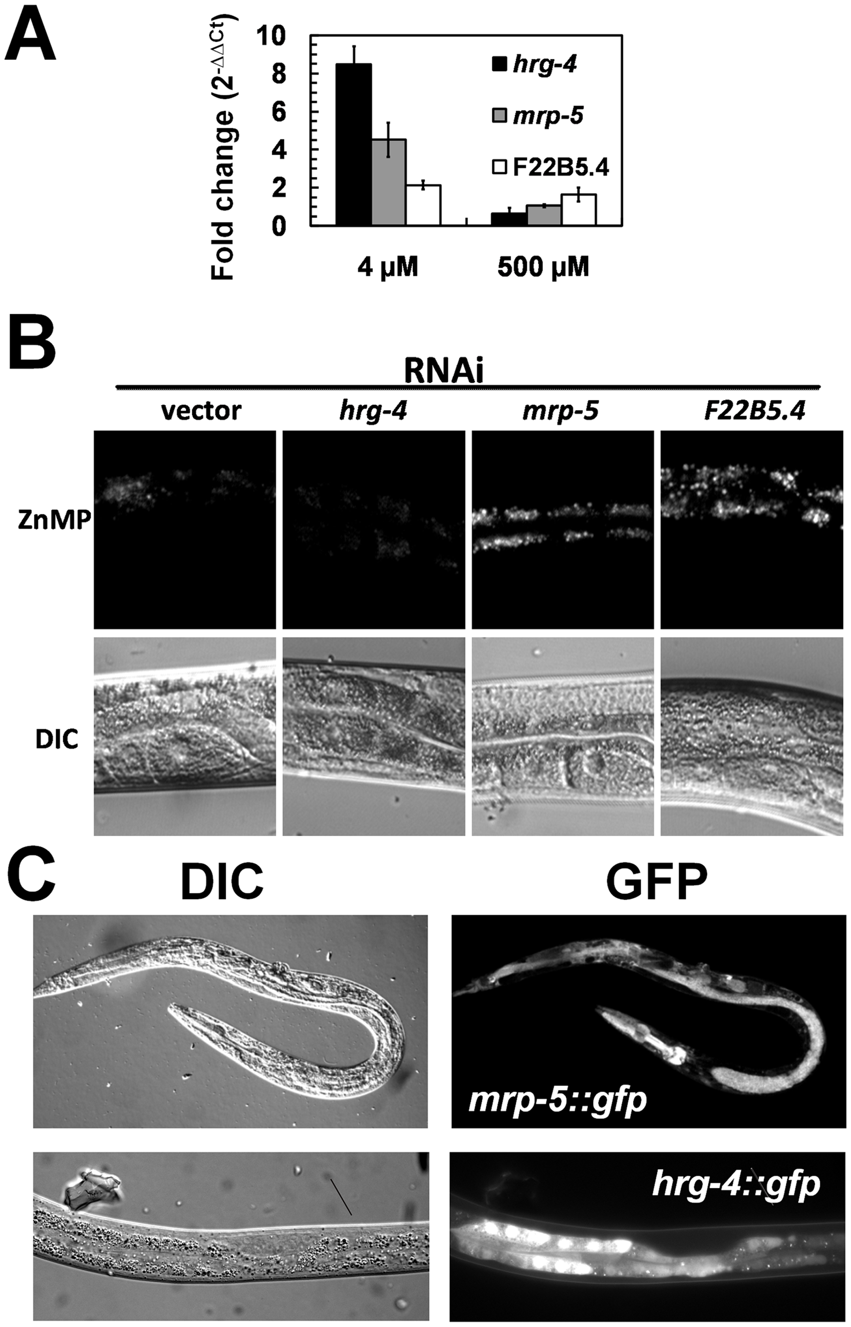 Characterization of the three candidate genes identified from the functional RNAi screens.