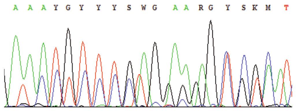 Sekvenogram – příklad výskytu nespecifických píků; nejčastěji z důvodu nedostatečného přečištění PCR od primerů, přítomnosti více produktů v sekvenační reakci, nízké specifičnosti primerů aj. (Označení píků K, M, R, S, W, Y – nomenklatura dle IUPAC-IUB, např. http://www.ncbi.nlm.nih.gov/staff/tao/tools/tool_lettercode.html.)