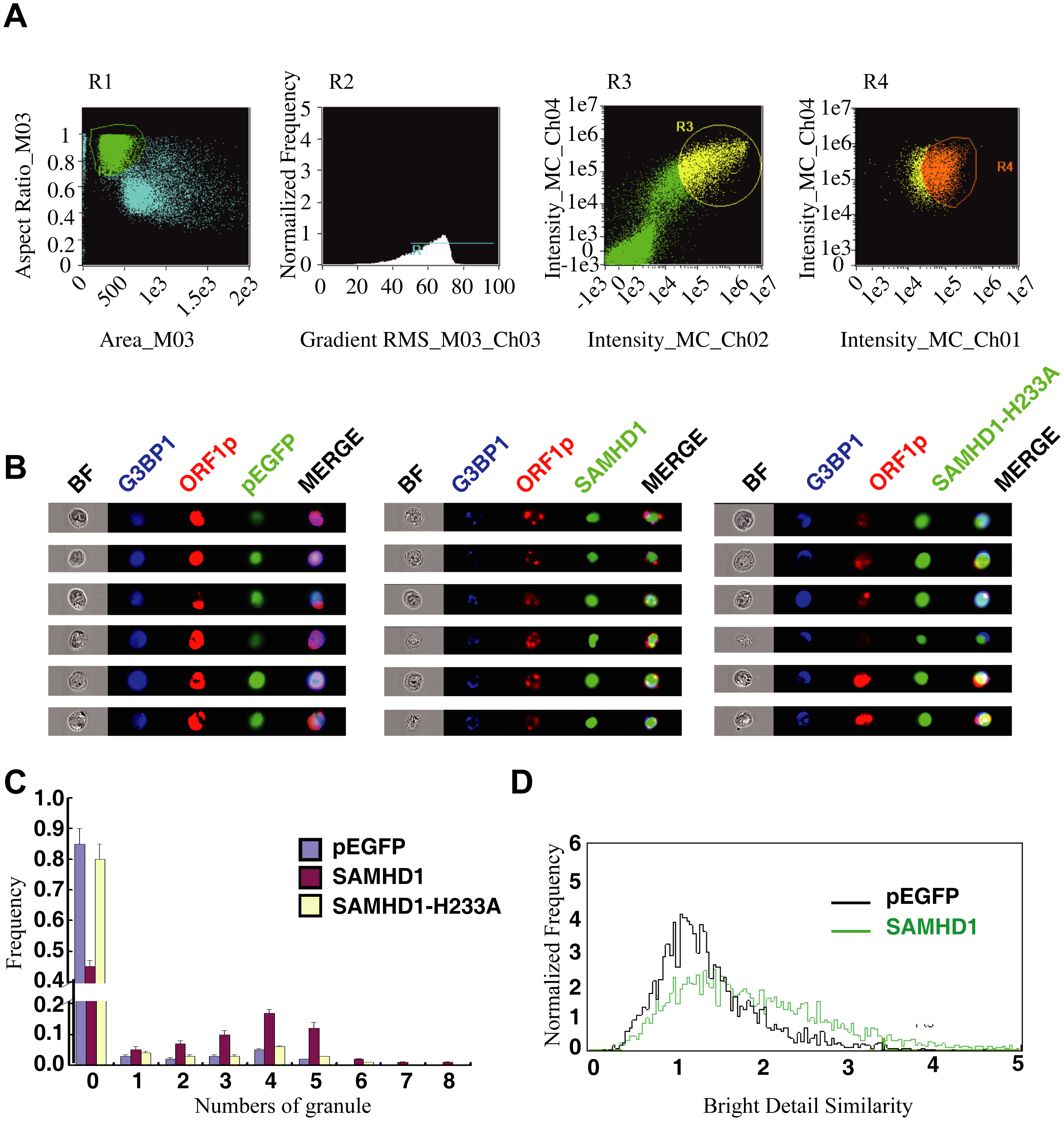ImageStream flow cytometry was utilized to monitor the formation of stress granules and co-localization of SAMDH1 and ORF1p.