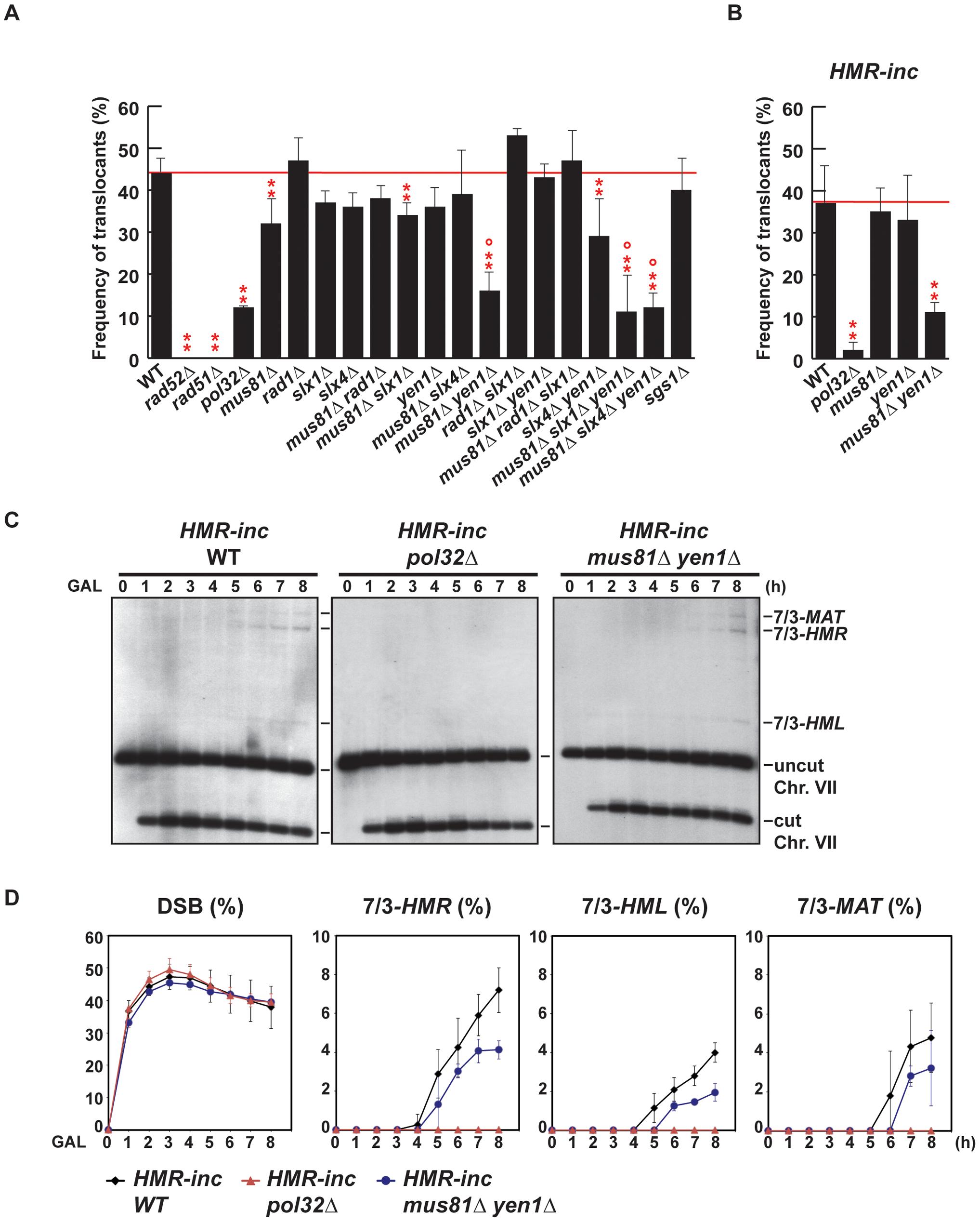 Genetic analysis of BIR intermediates processing in SSE mutants.