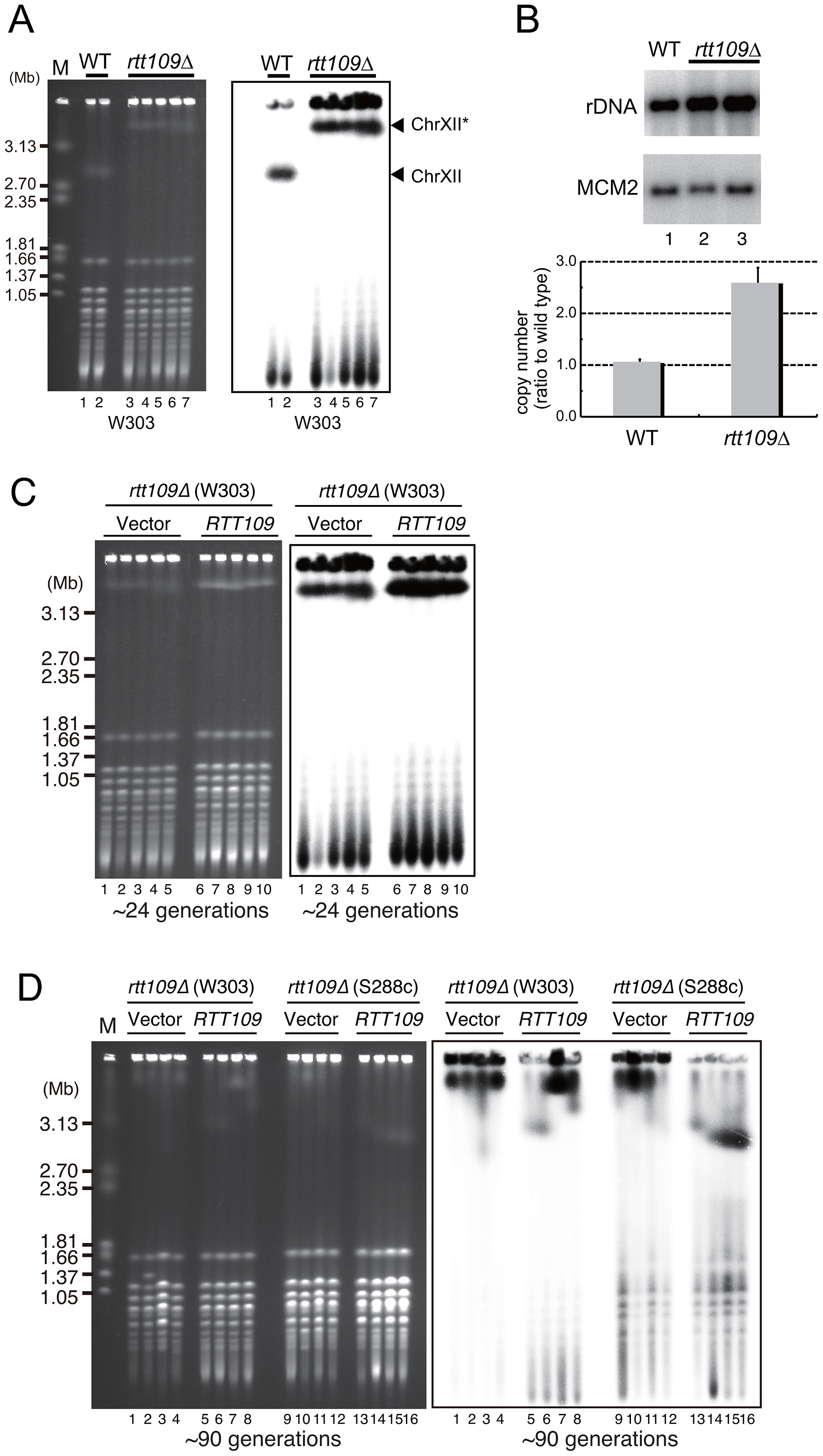 Hyper-amplification of rDNA is induced by deletion of <i>RTT109</i>.