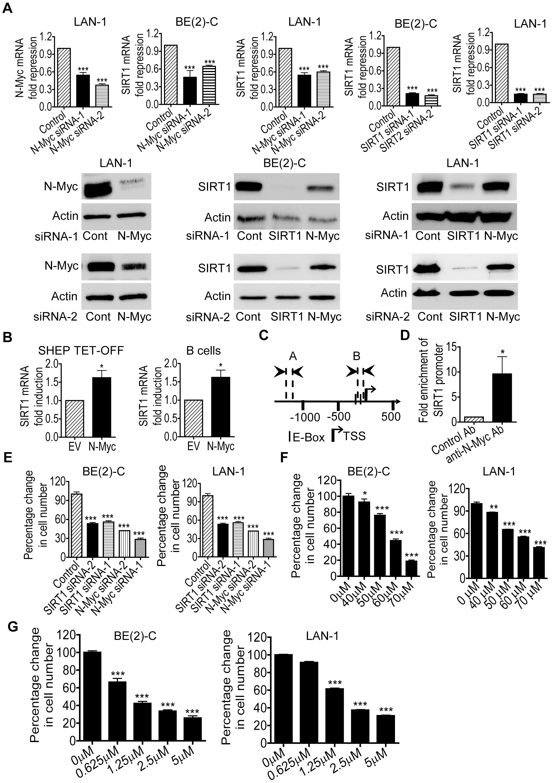 Transcriptional up-regulation of SIRT1 promotes neuroblastoma cell proliferation.