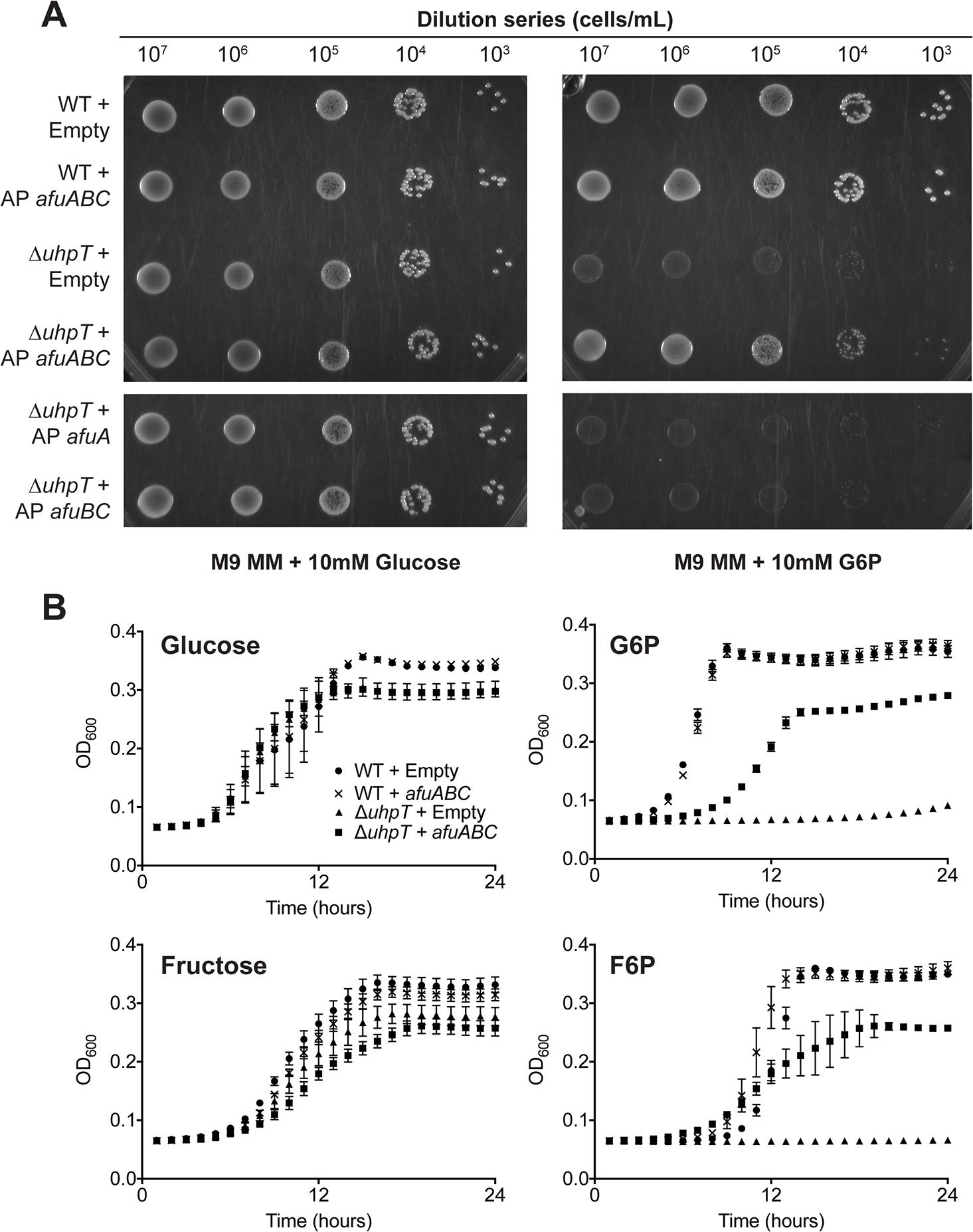 <i>afuABC</i> rescues a nutrient-limited <i>E</i>.<i>coli</i> strain.
