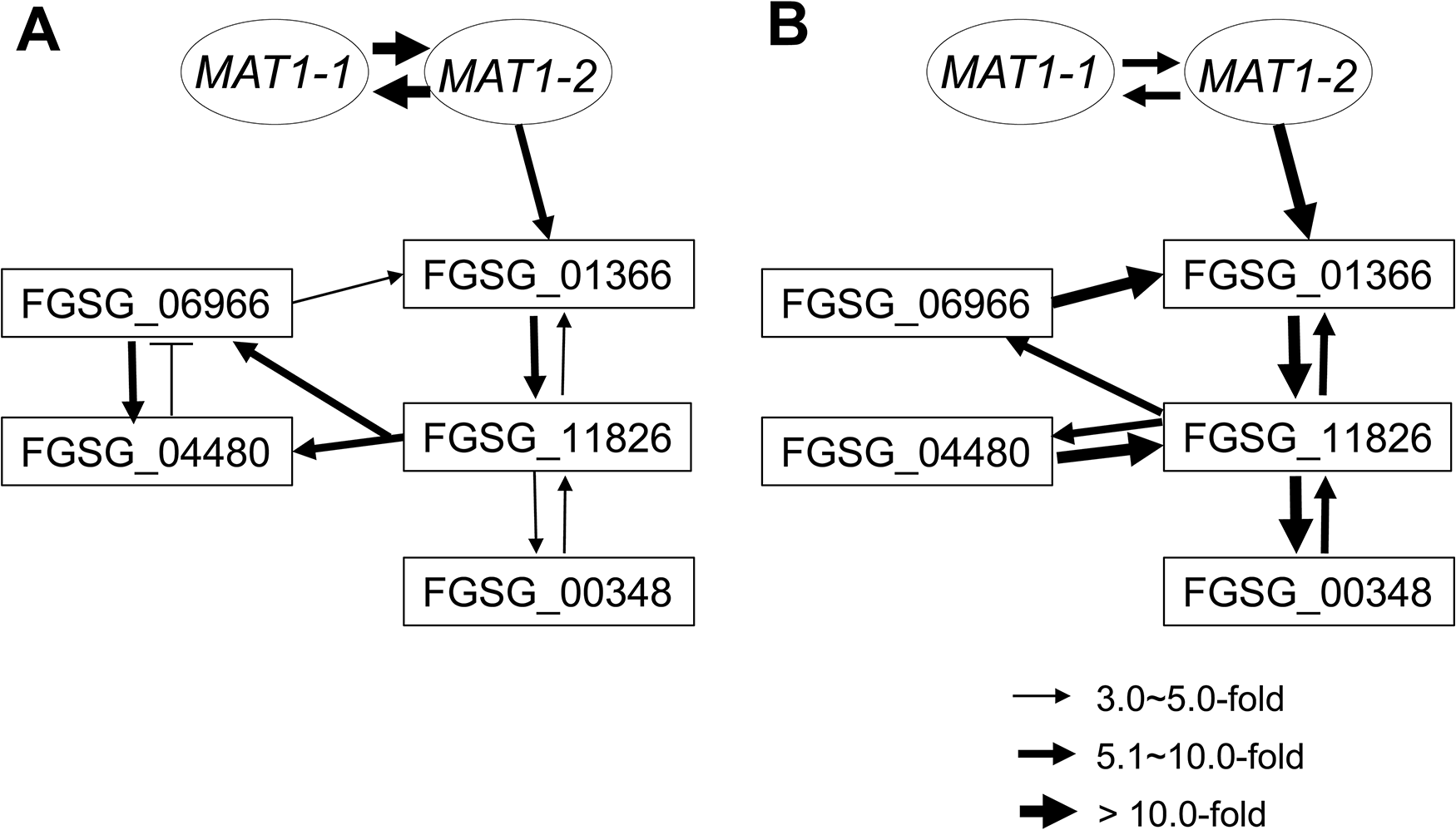 Regulatory networks among the sexual transcription factors (TFs) and an RNAi regulator (FGSG_00348) under control of the <i>MAT</i> loci during sexual development in <i>F</i>. <i>graminearum</i>.