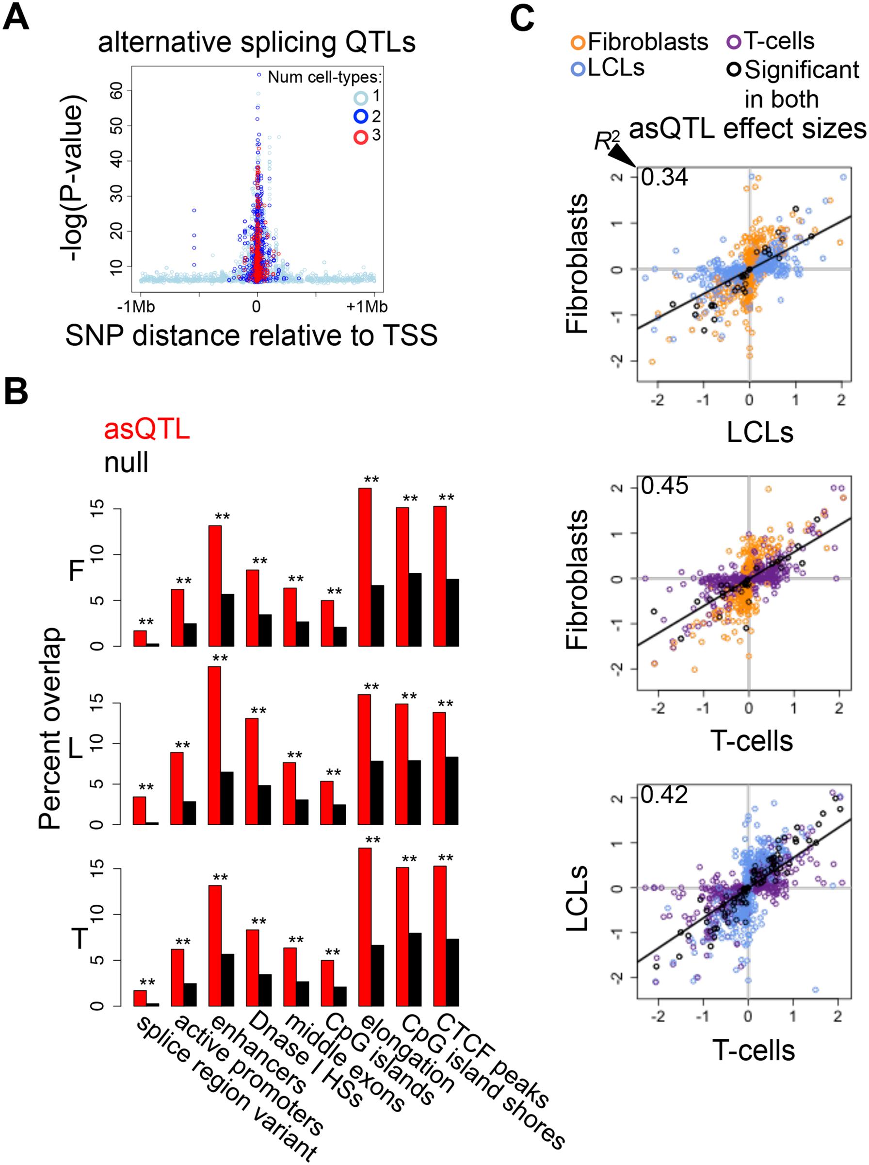 Genetic effects on alternative splicing.