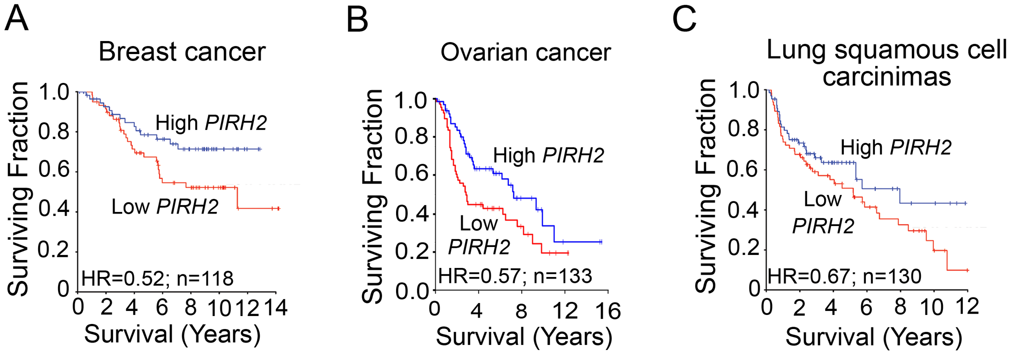Downregulation of PIRH2 Associates with Short-Term Survival of Patients with Breast Cancer, Ovarian Cancer, or Squamous Cell Carcinomas of the Lung.