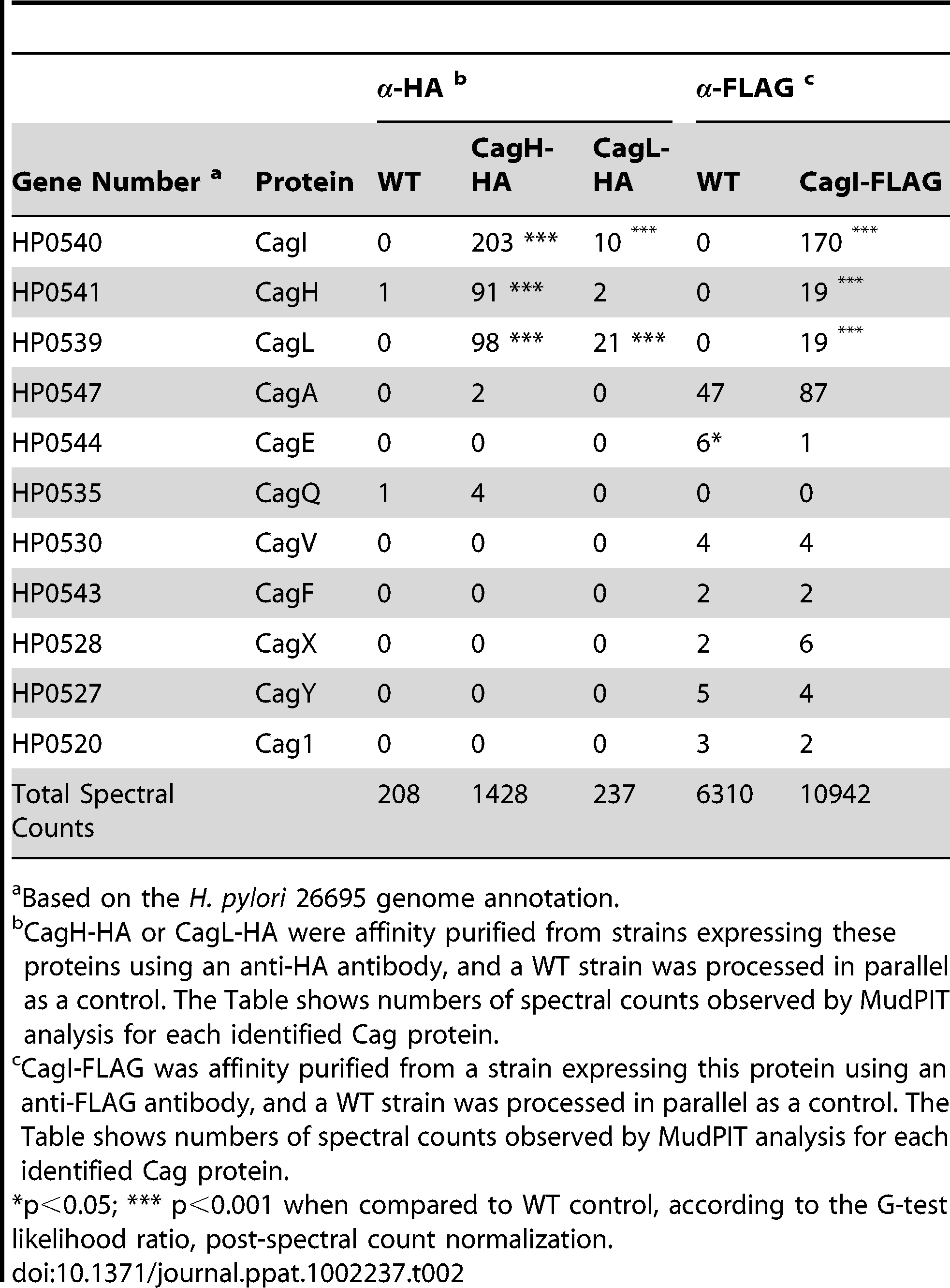 Cag proteins that co-purify with epitope-tagged CagH, CagI, and CagL.