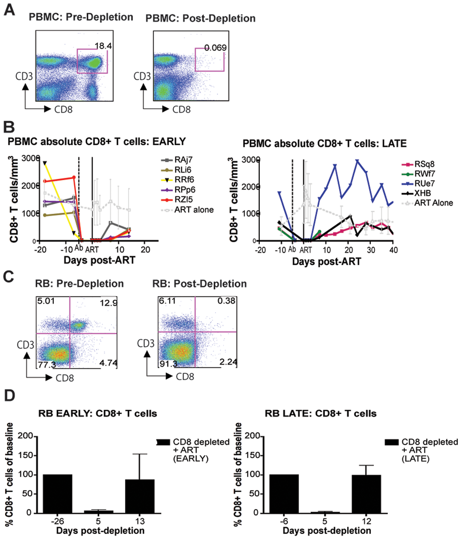 Administration of OKT8F results in near complete depletion of CD8+ lymphocytes.