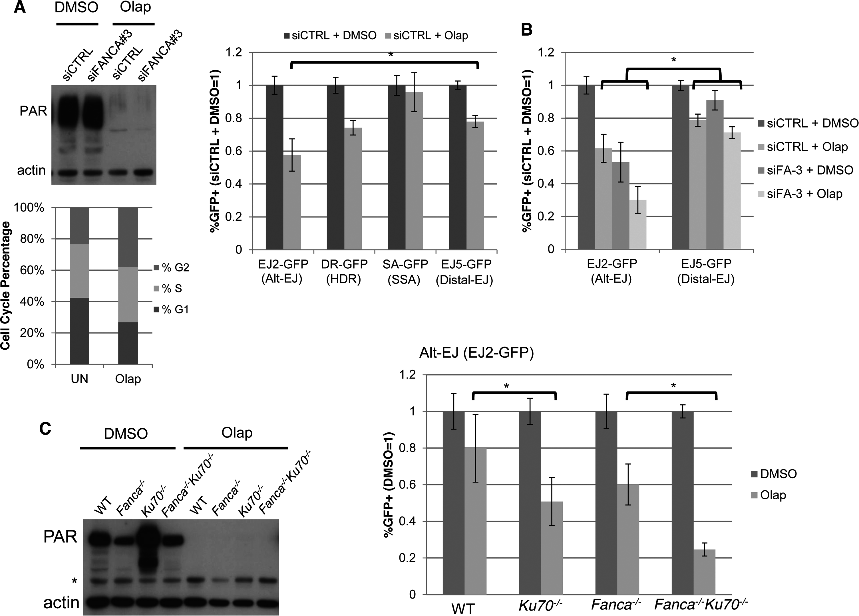 PARP inhibition causes a decrease in Alt-EJ that is enhanced by Ku70 loss.