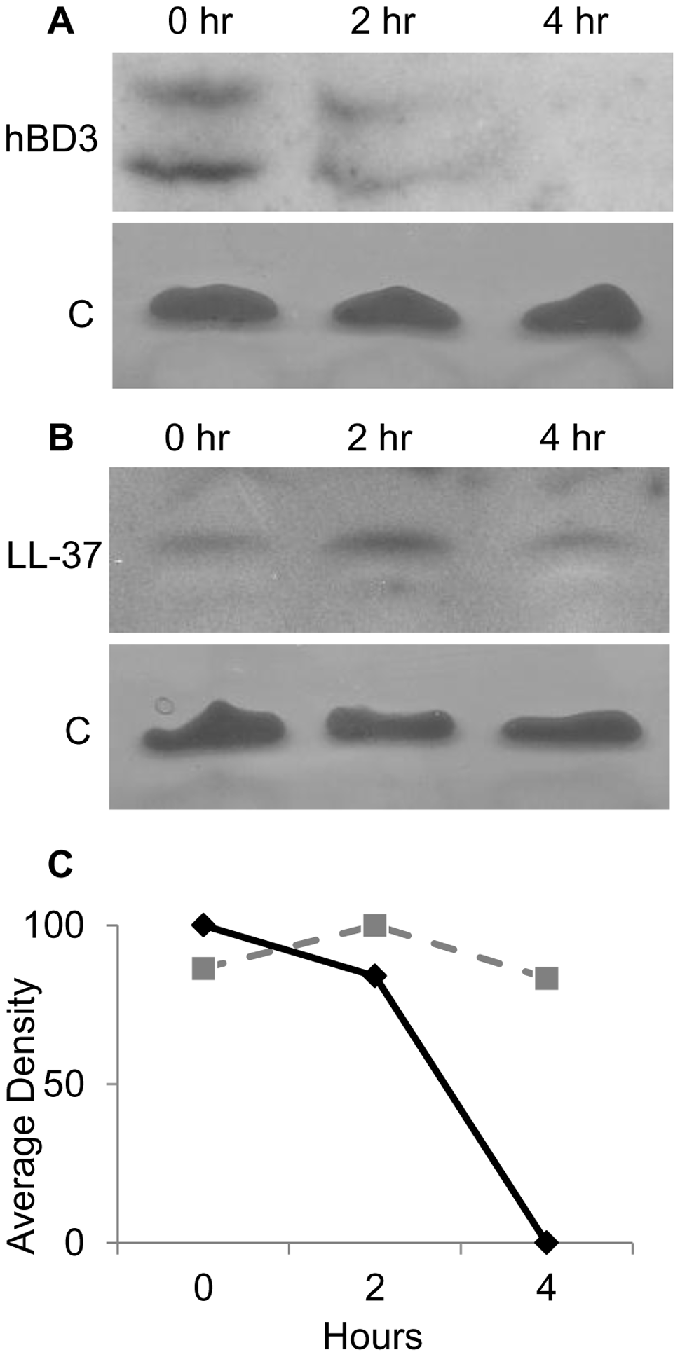 <i>In vivo</i> degradation of AMPs in NTHI cytoplasm.