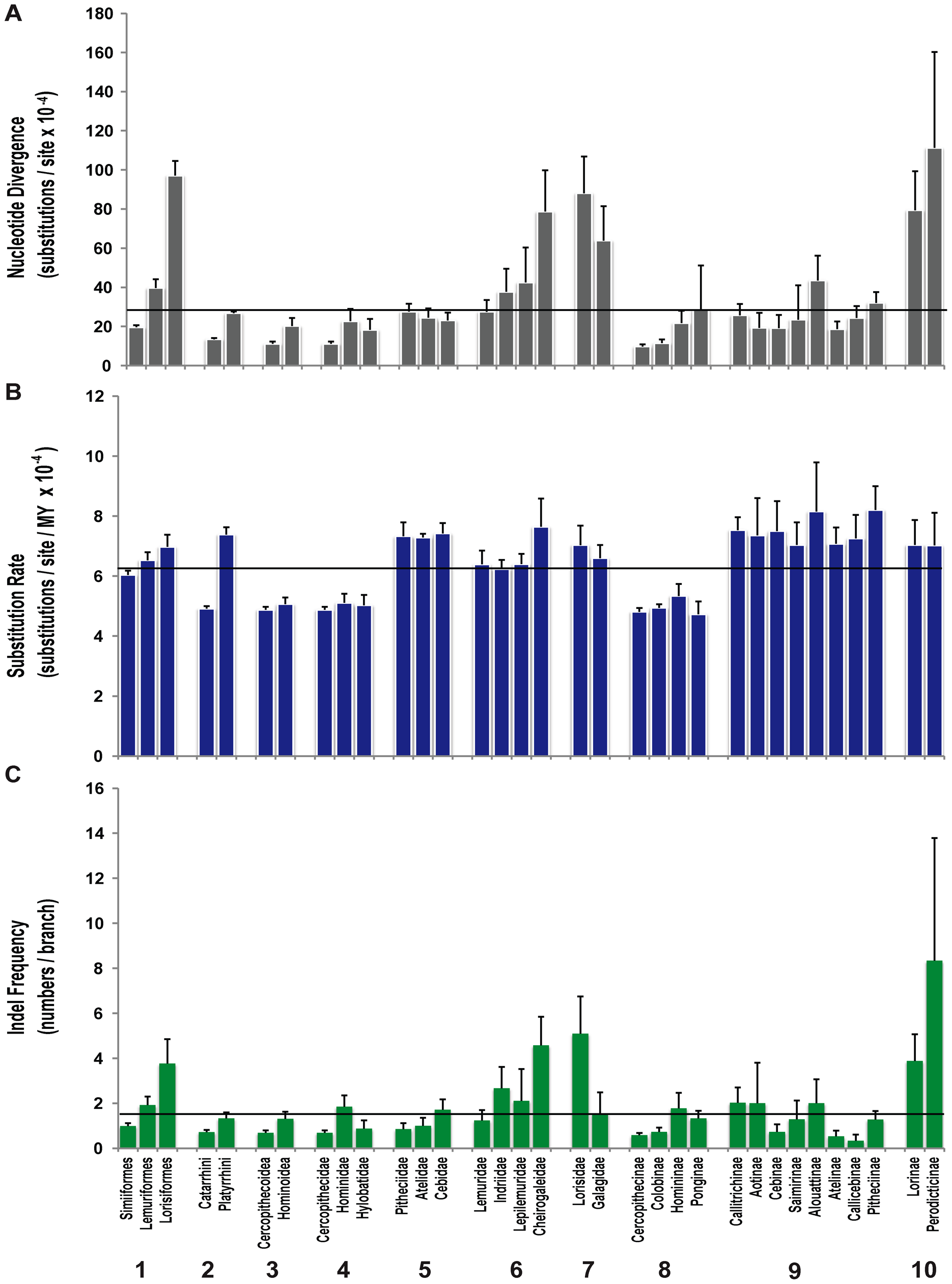 Patterns of nucleotide substitution and indel frequency in different categories of primate taxonomy.