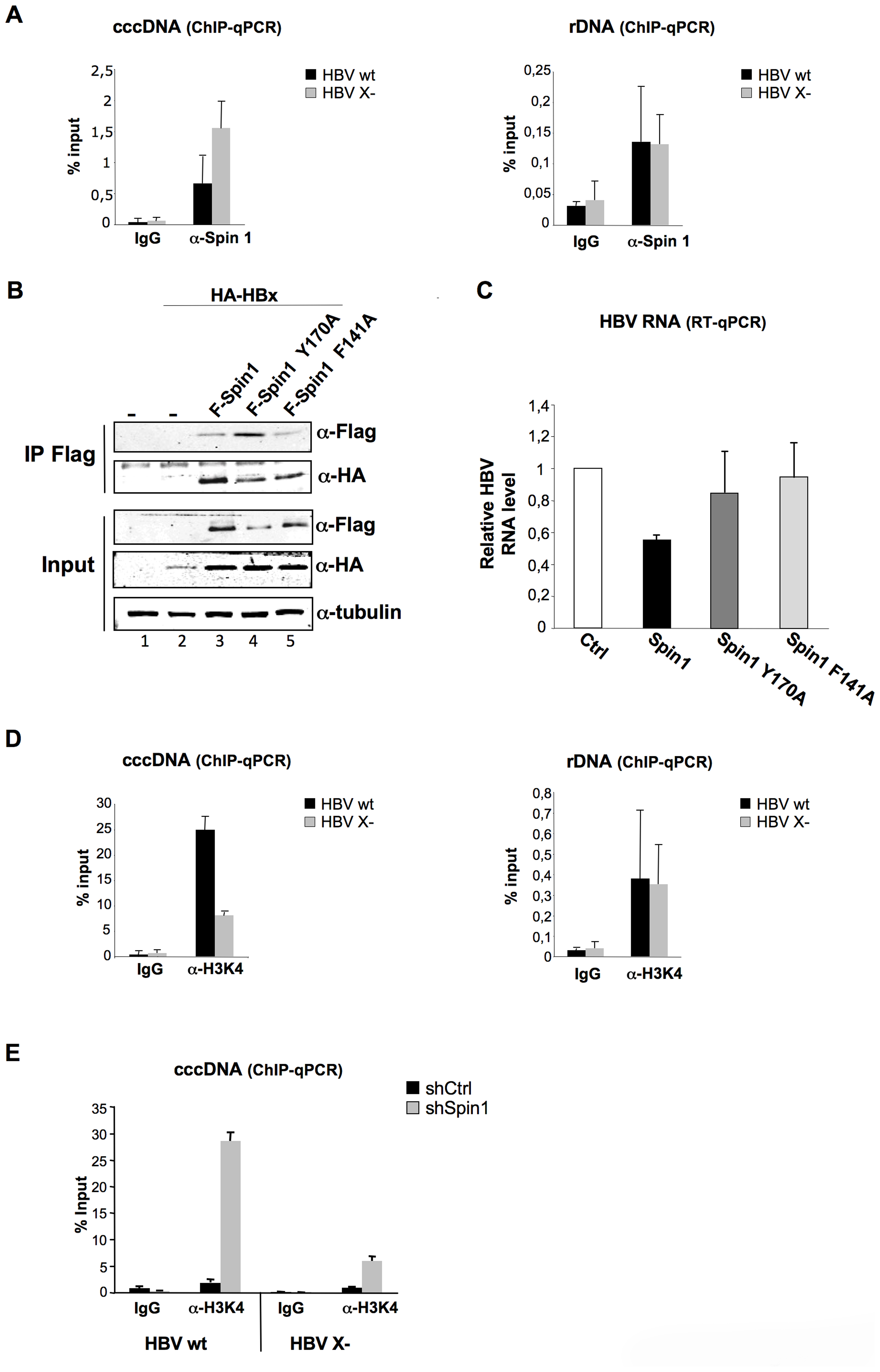 HBx expression correlates with the decrease of Spindlin1 recruitment to the cccDNA.