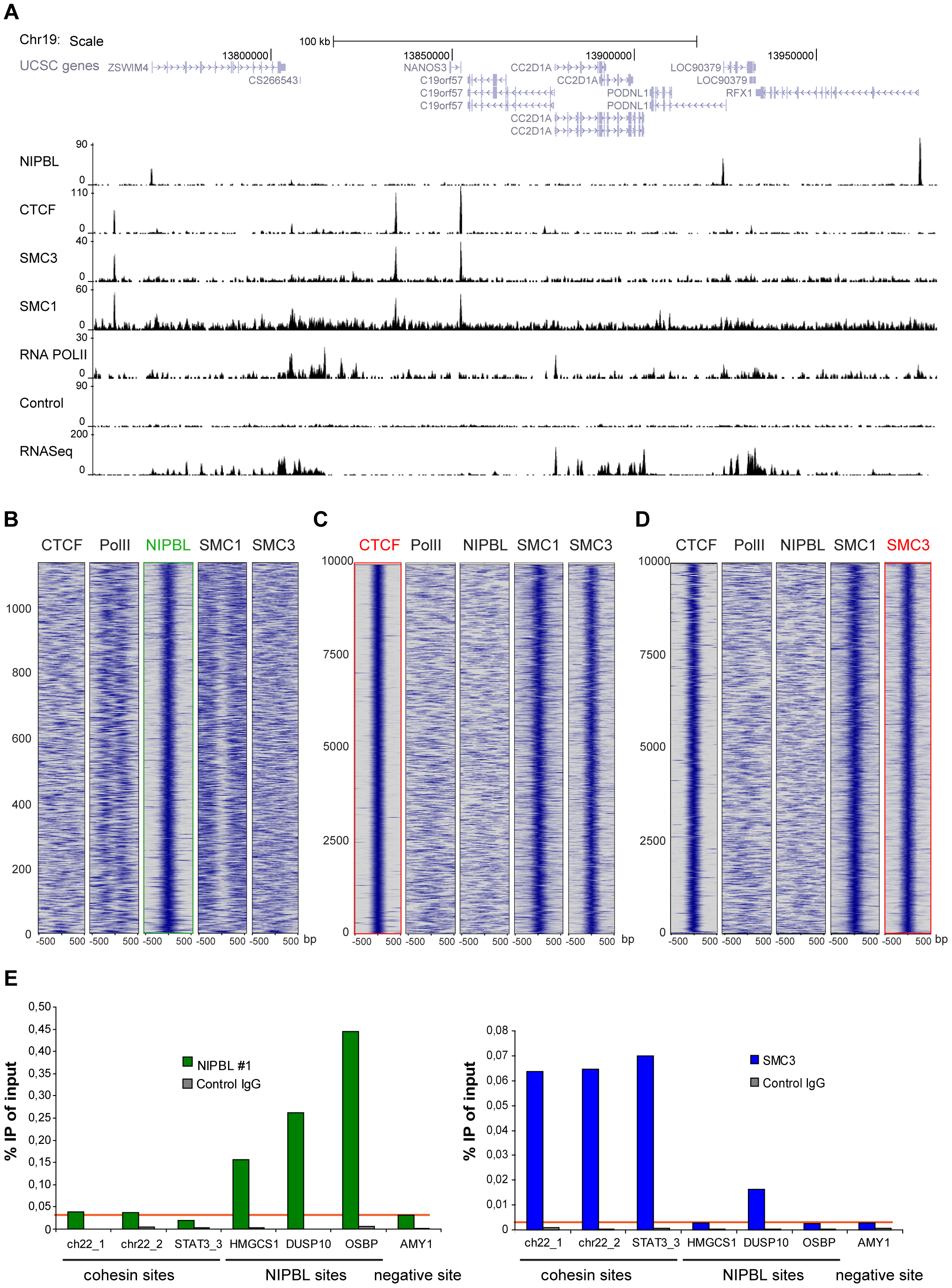 Binding of NIPBL, cohesin and CTCF in the human genome.